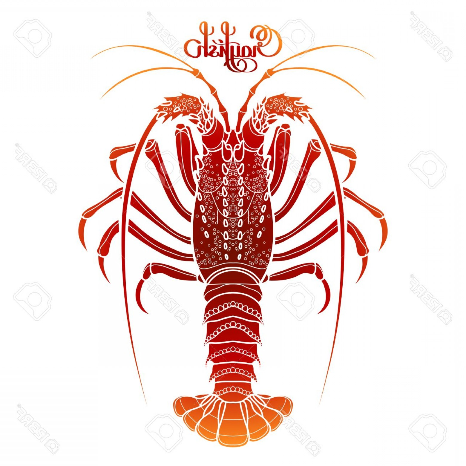 Lobster Clip Art Vector: Photostock Vector Graphic Vector Crayfish Drawn In Line Art Style Spiny Or Rocky Lobster Sea And Ocean Creature Isolat