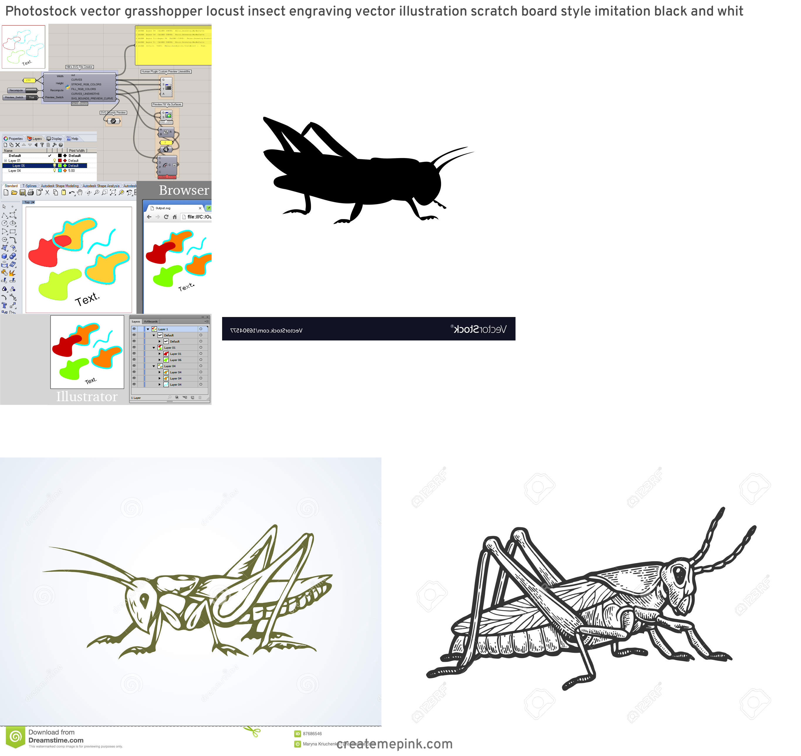 Grasshopper Vector Graphics: Photostock Vector Grasshopper Locust Insect Engraving Vector Illustration Scratch Board Style Imitation Black And Whit