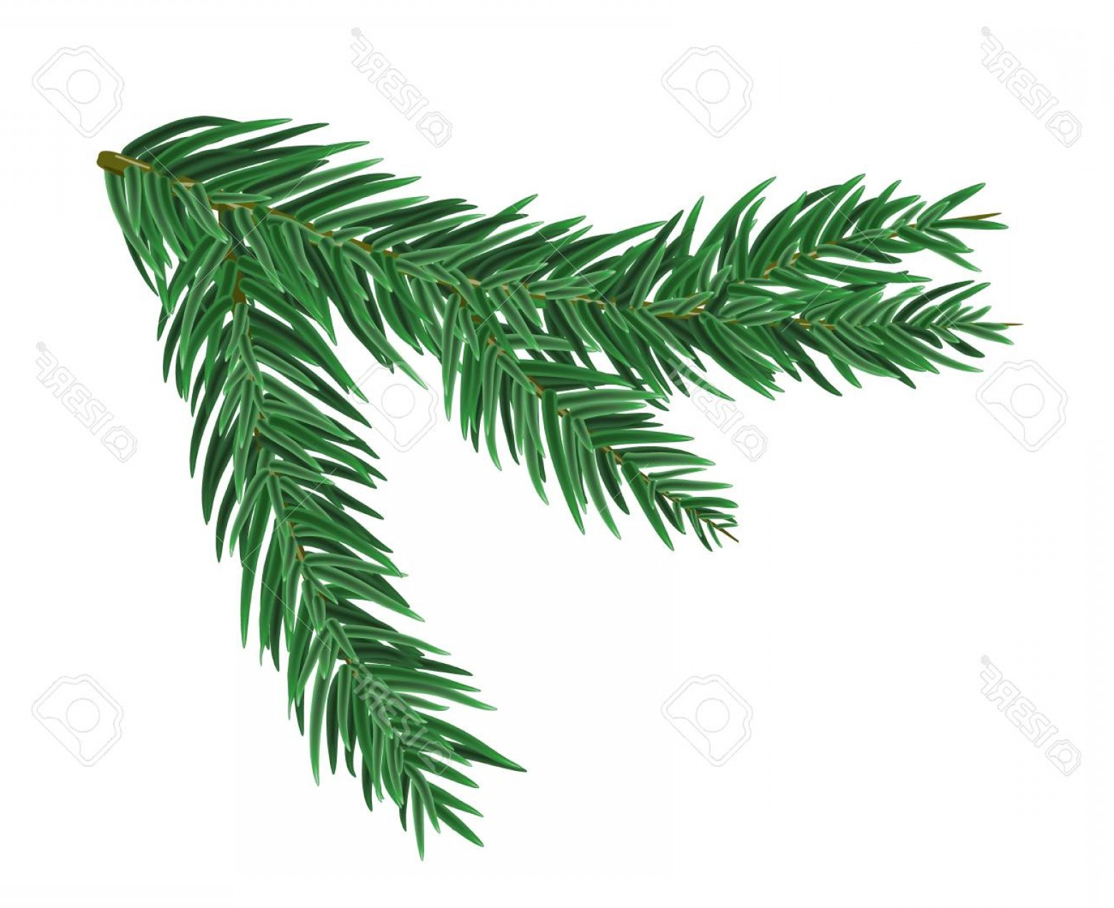 Pine Leaf Vector: Photostock Vector Green Lush Spruce Or Pine Branch Vector Illustration