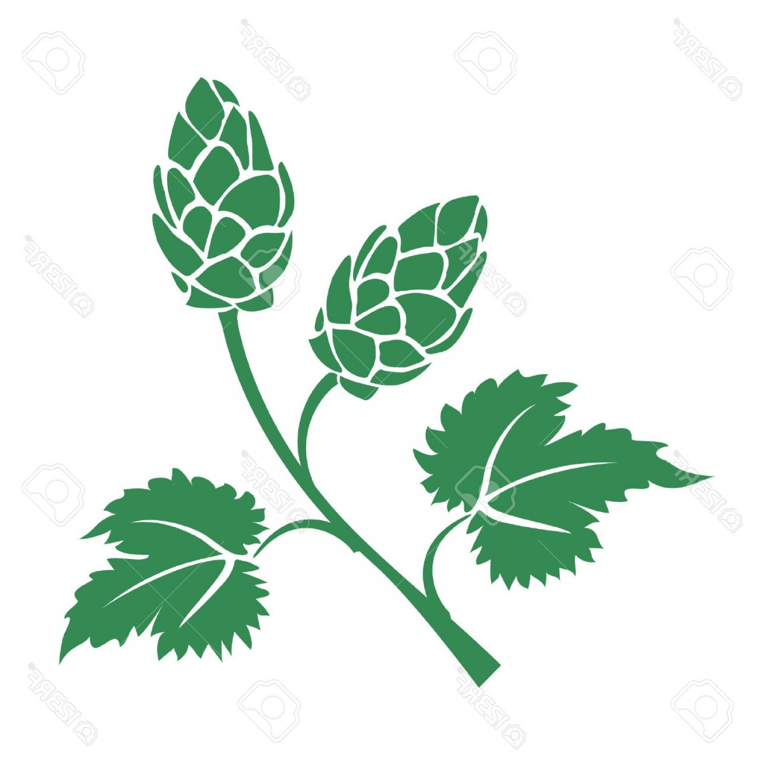 Beer Hops Vector: Photostock Vector Green Vector Silhouette Hops Icon With Leaves And Cone Like Flowers Used In The Brewing Industry To