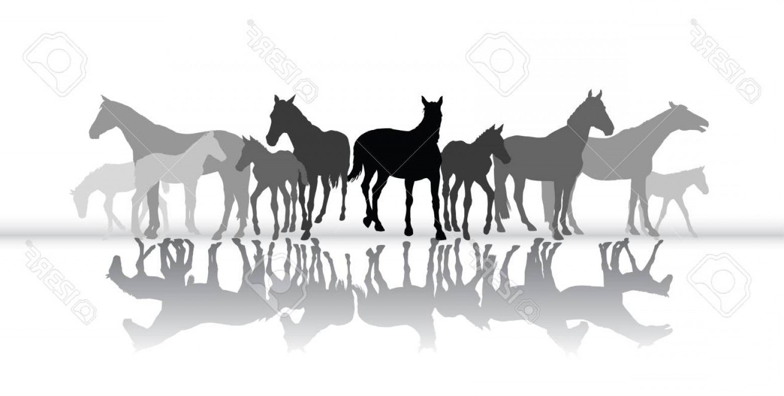 Sillouhette Vector Group: Photostock Vector Group Of Isolated Black And Grey Standing Silhouettes Of Horses Mares And Foals With Their Reflectio