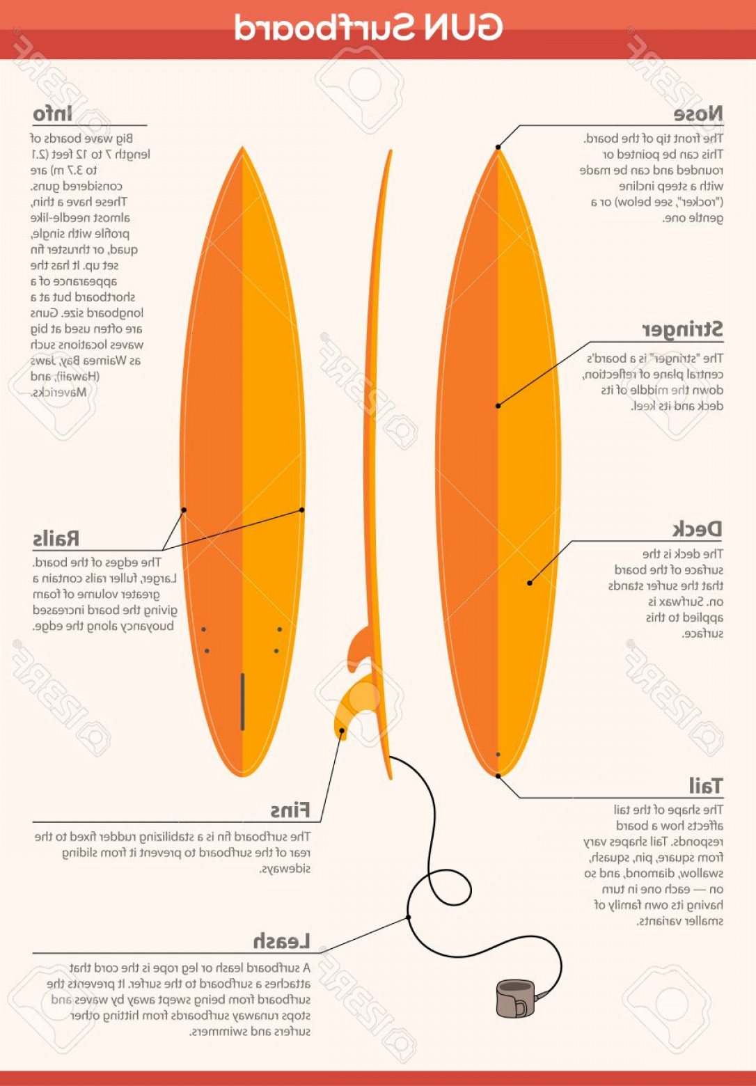 Orange Surfboard Vector: Photostock Vector Gun Surfboard Vector Infographics