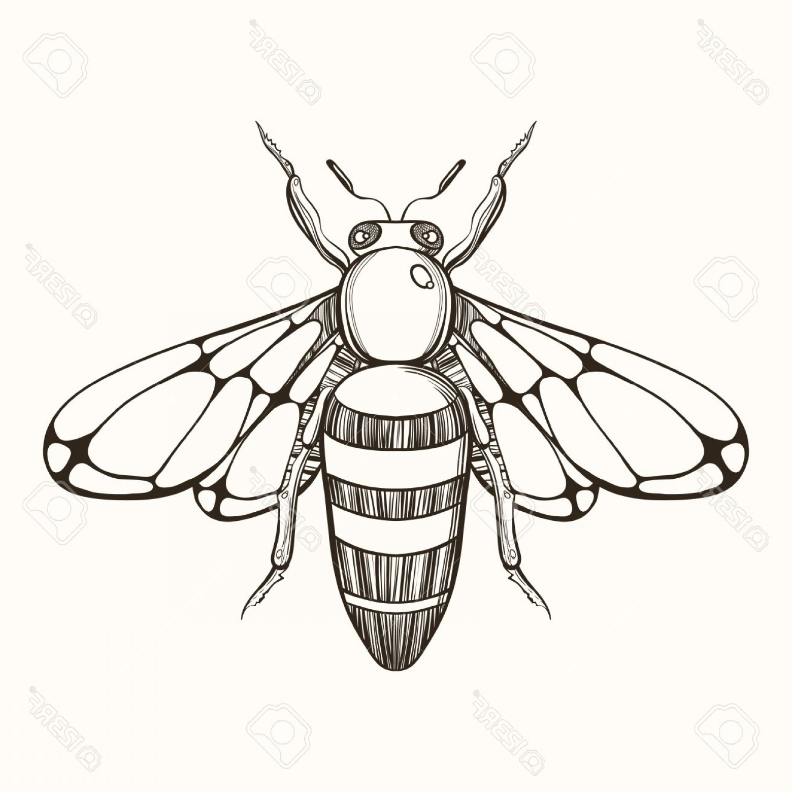 Bee Drawing Vector: Photostock Vector Hand Drawn Engraving Sketch Of Bee Vector Illustration For Tattoo And Handmade Decorative Brooch
