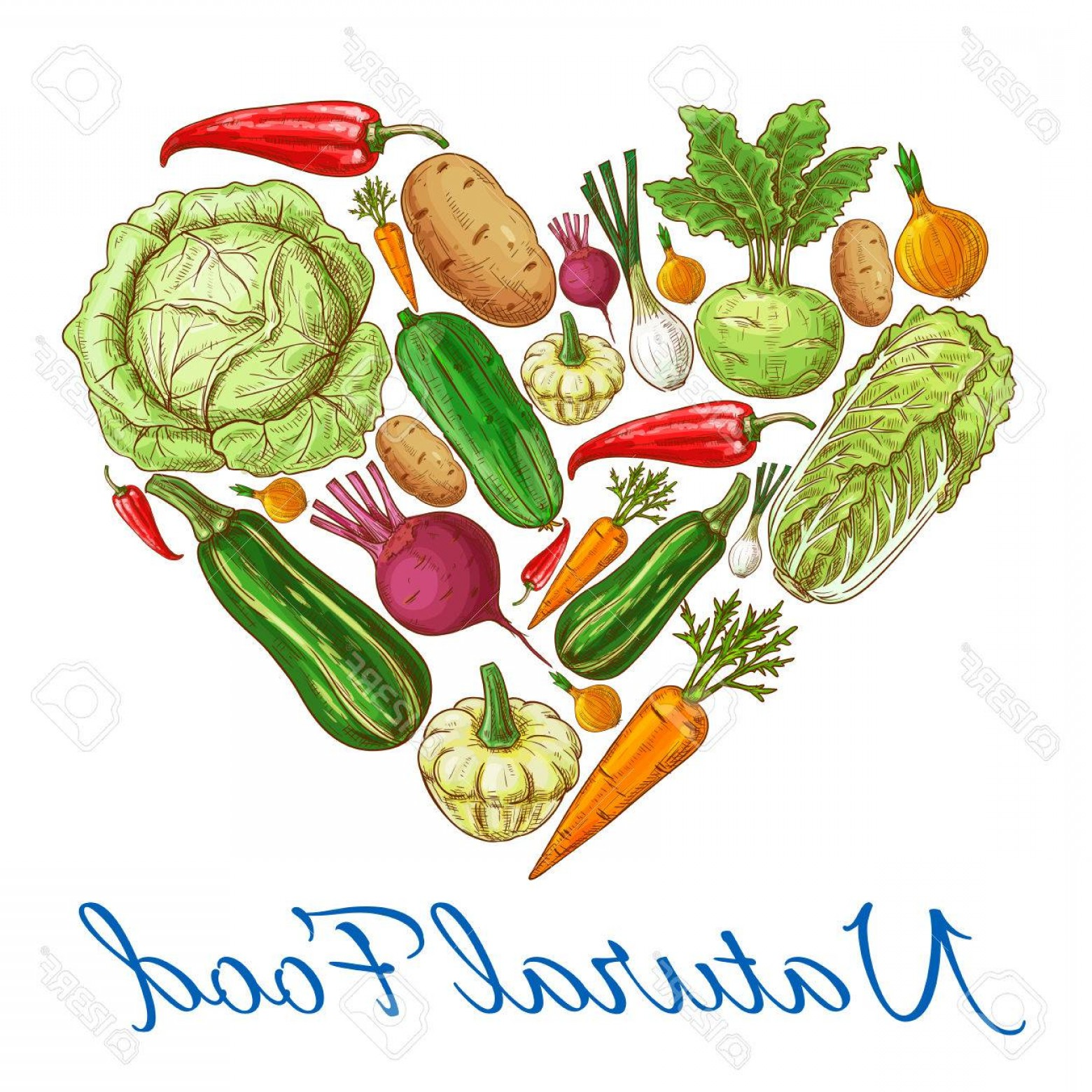 Vegan Heart Vectors: Photostock Vector Heart Of Vegetables Vector Natural Vegetarian Food Vegan Fresh Natural Organic Farm Vegetables Cabba