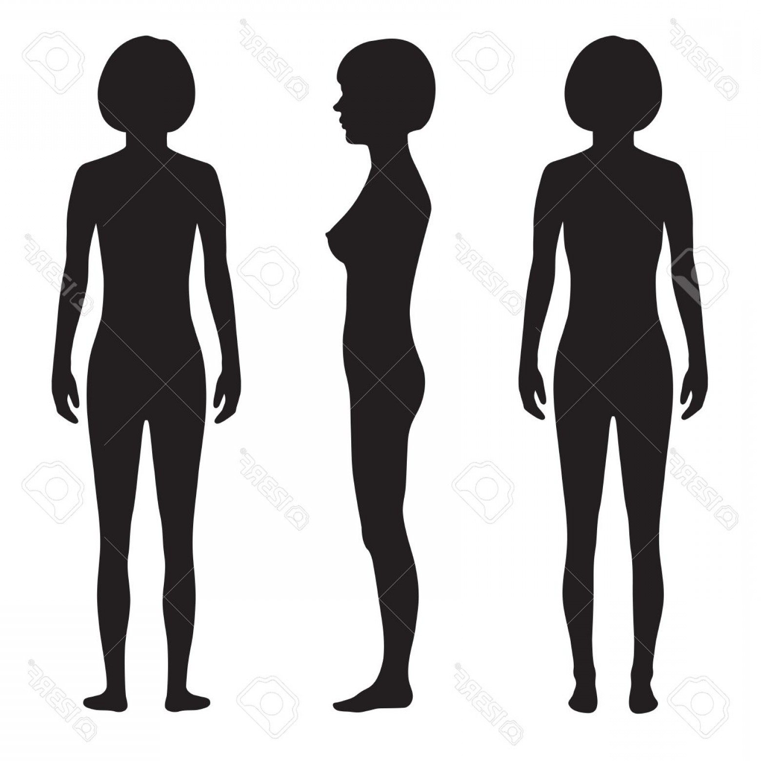 Male Human Vector: Photostock Vector Human Body Anatomy Front Back Side Vector Woman Silhouette