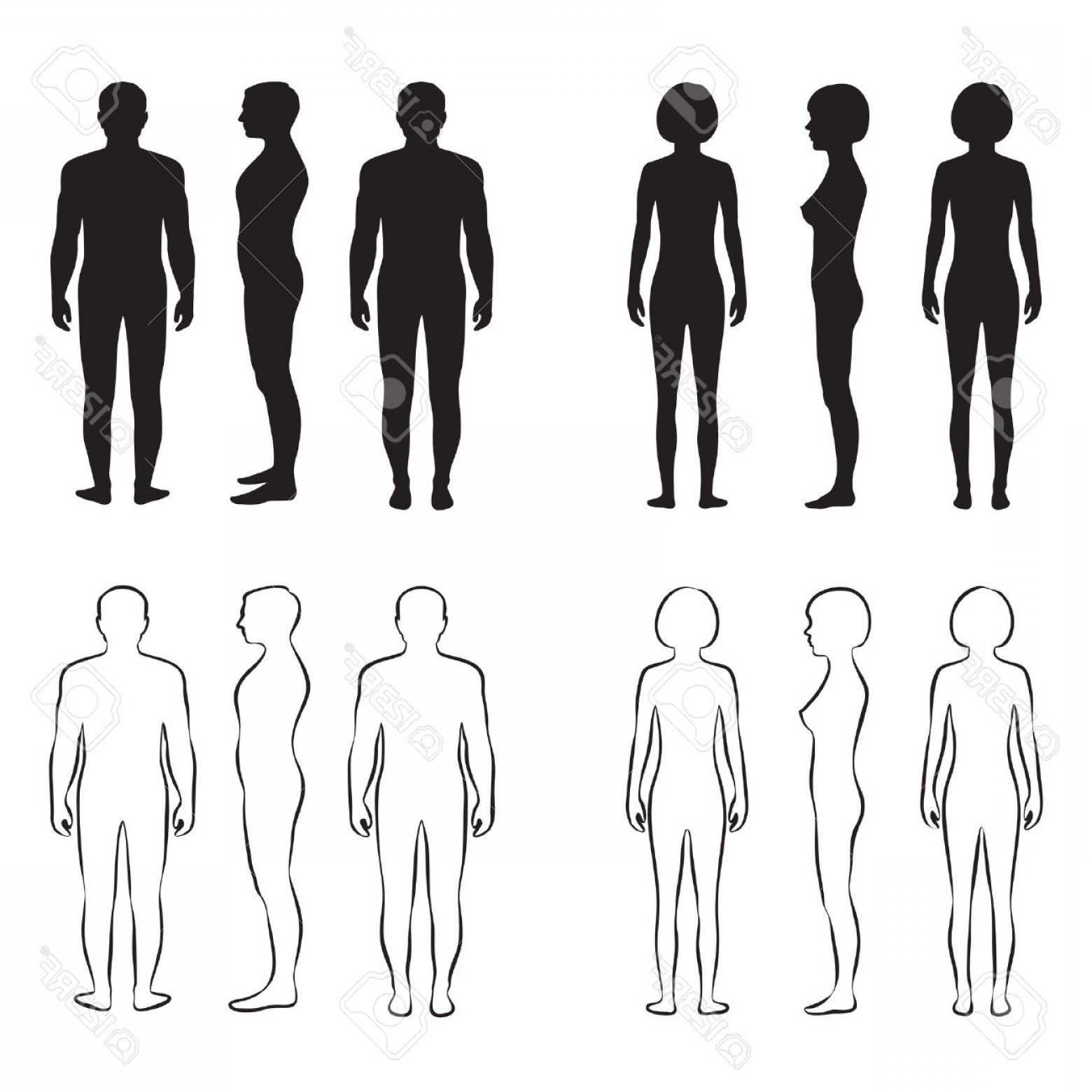 Male Human Vector: Photostock Vector Human Body Anatomy Front Vector Man Woman Silhouette