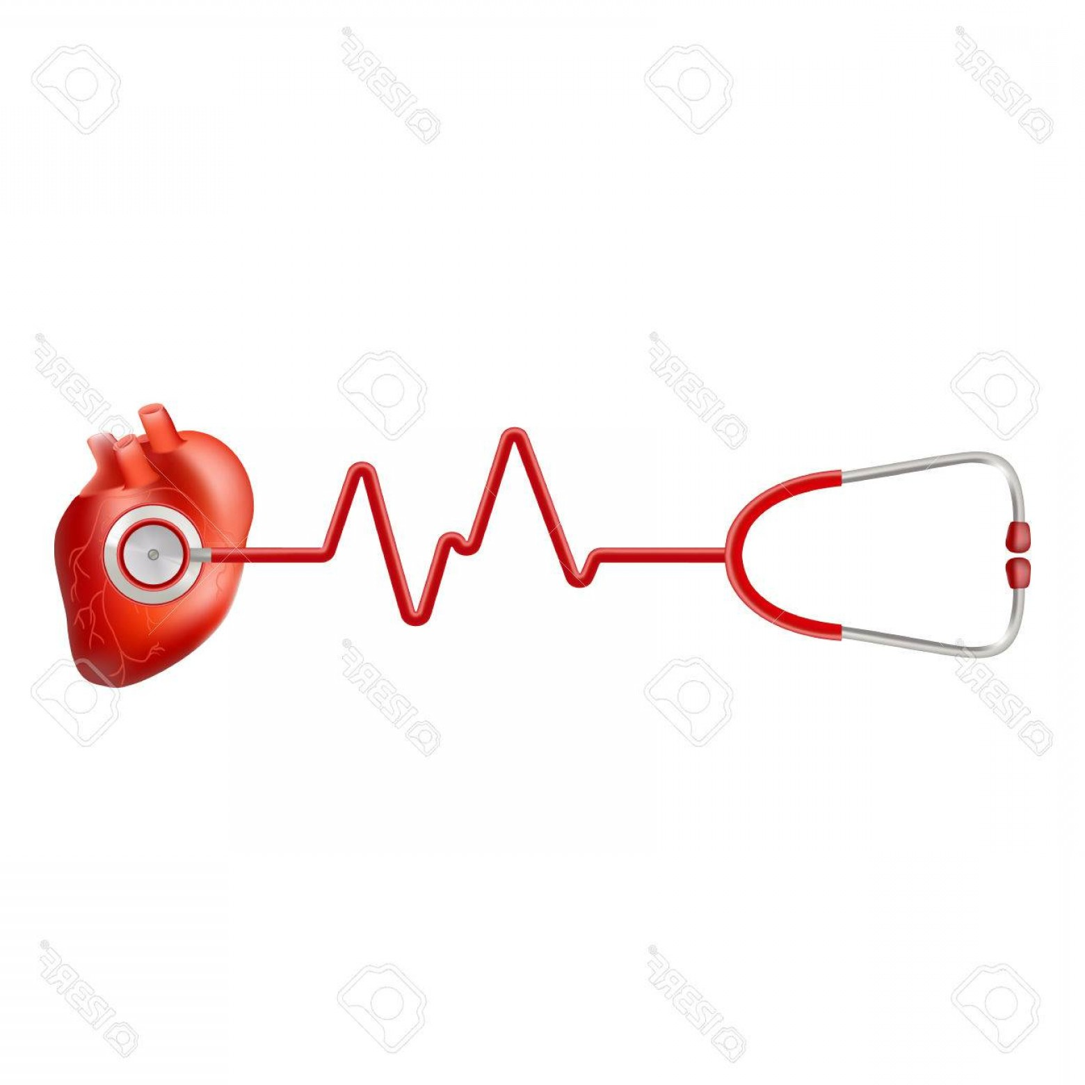 Heart With EKG Line Vector: Photostock Vector Human Heart And Heart Beat On Ekg With Stethoscope Isolated On A White Background Realistic Vector I