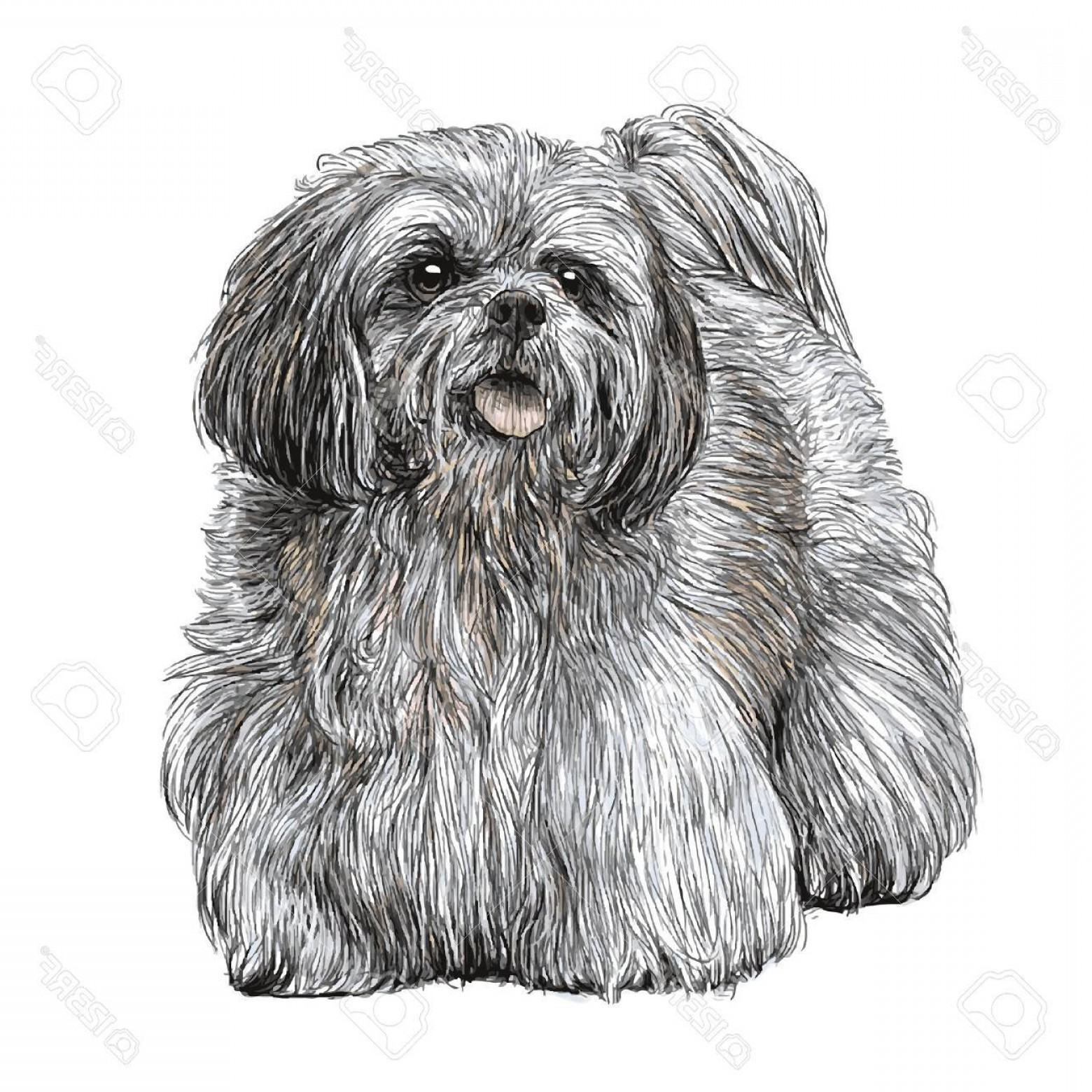 Shih Tzu Clipart-Vector: Photostock Vector Image Of Lhasa Apso Hand Drawn Vector