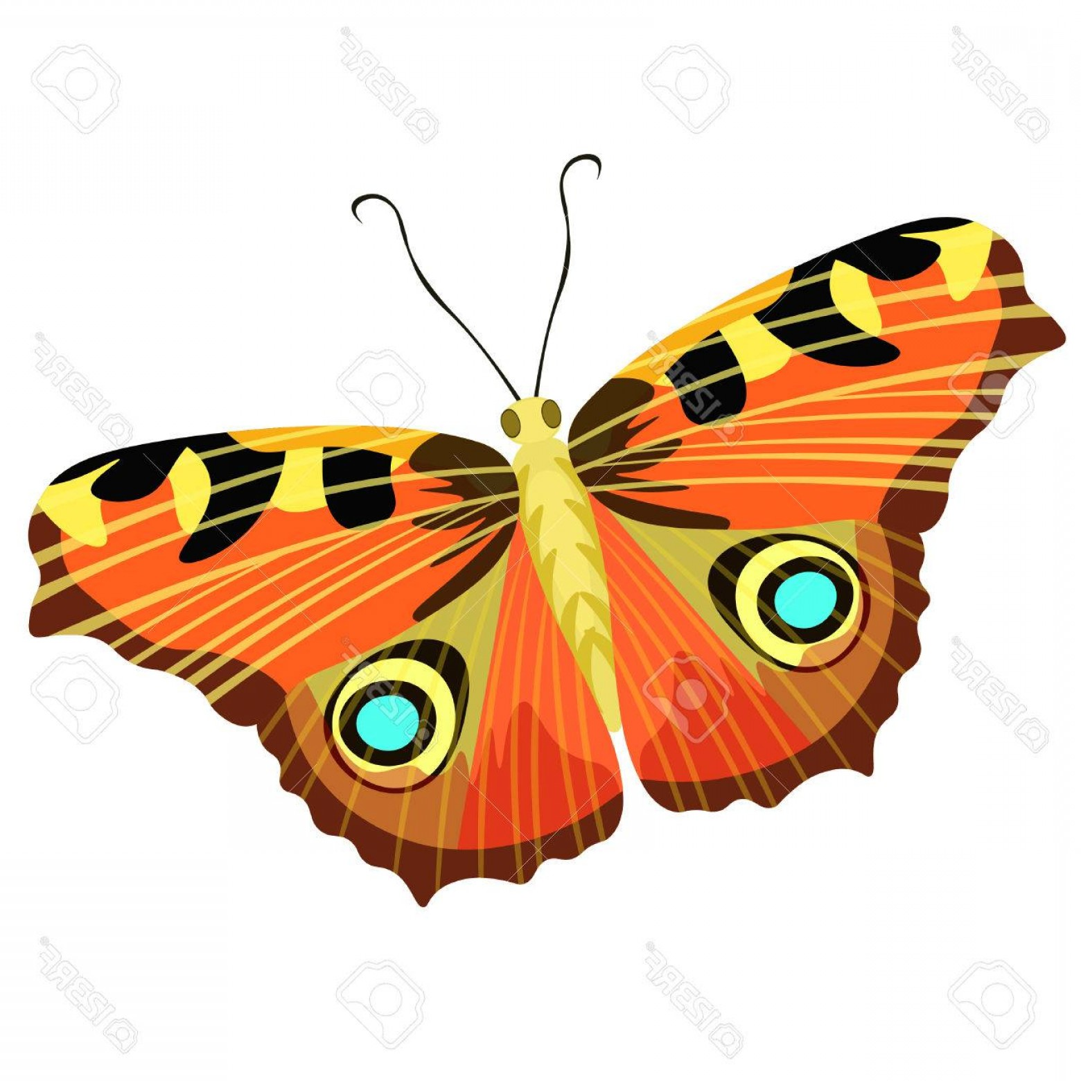 Real Butterfly Vector: Photostock Vector Isolated A Butterfly Peacock Eye Vector Illustration