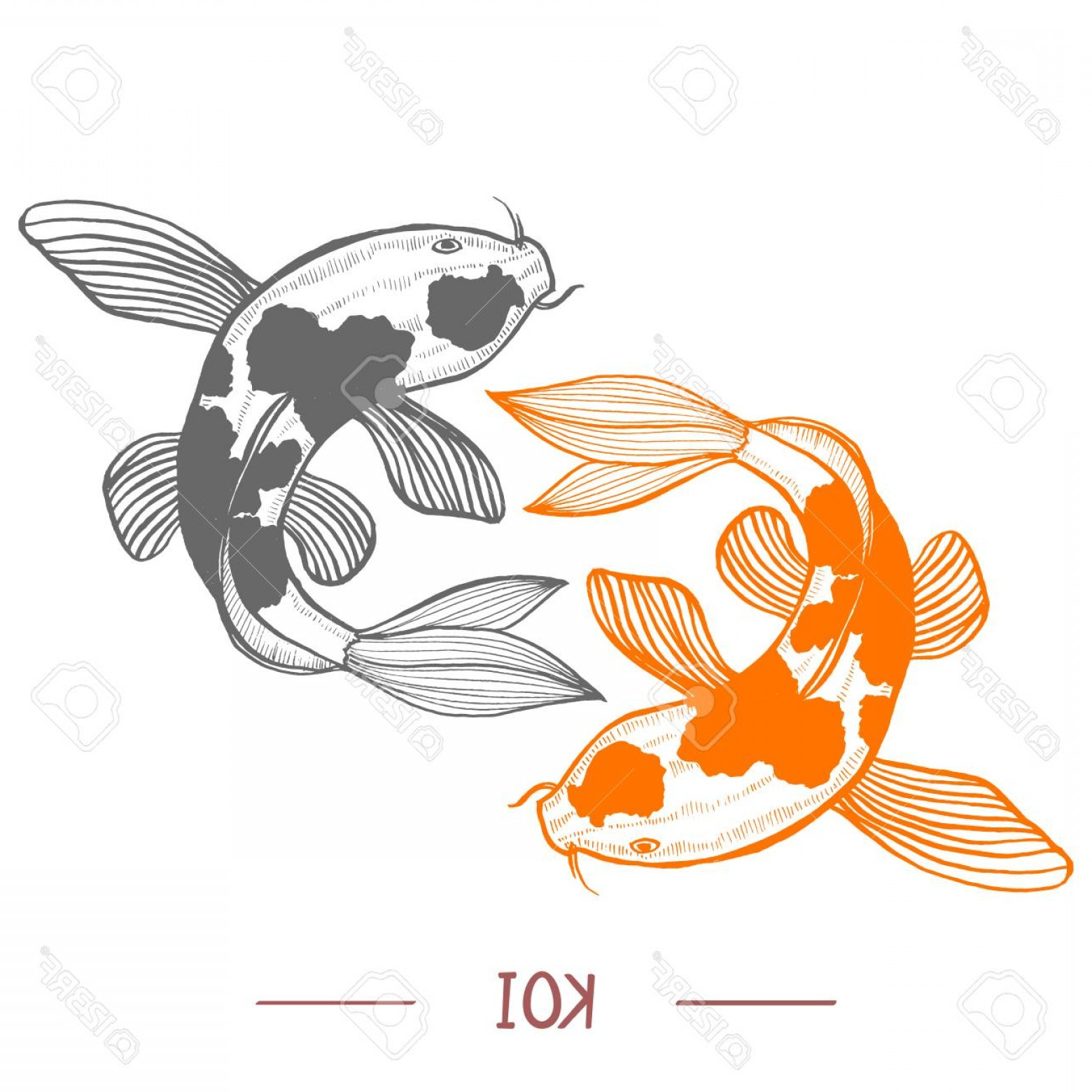 Koi Vector: Photostock Vector Karp Koi Vector Illustration