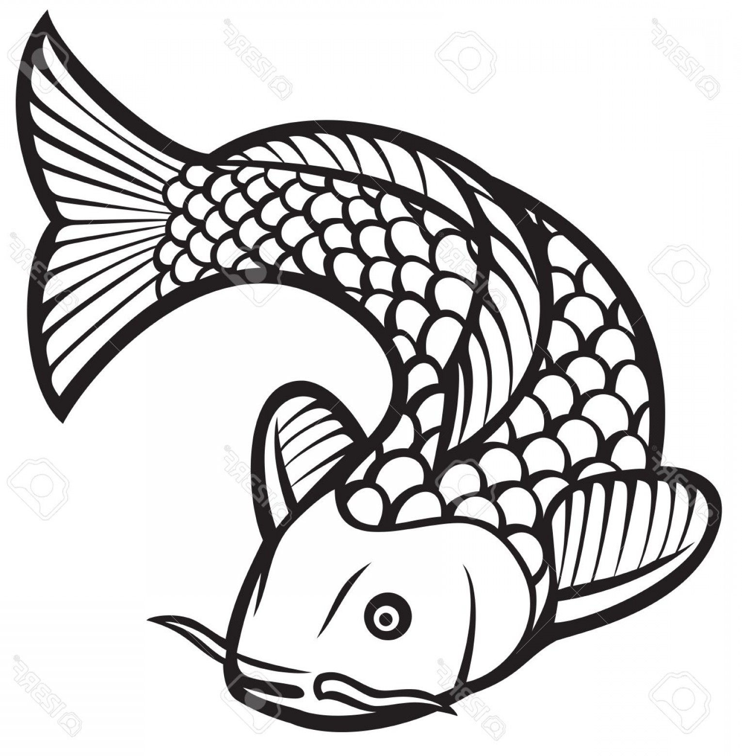 Black And White Koi Vector: Photostock Vector Koi Fish Vector Illustration Of A Japanese Or Chinese Inspired Koi Carp Fish