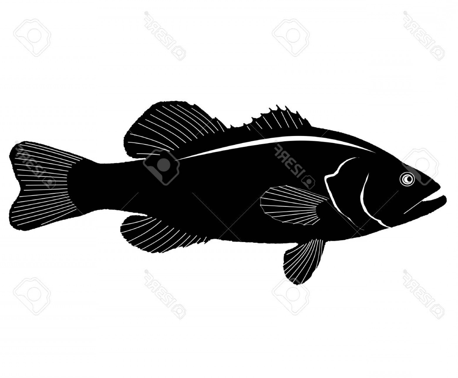 Largemouth Bass Silhouette Vector: Photostock Vector Large Mouth Bass