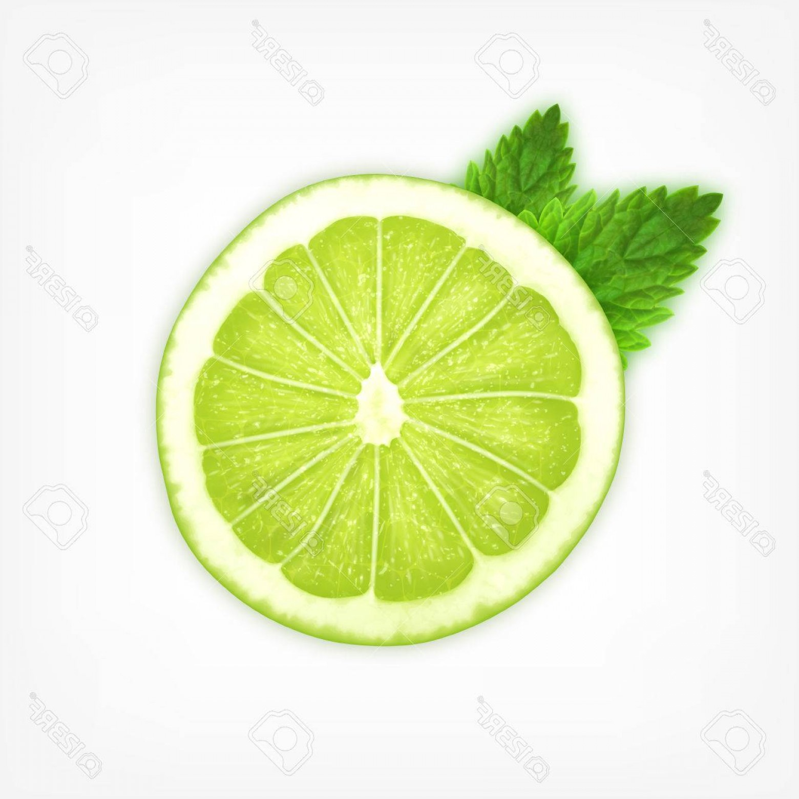 Lime Wedge Vector Art: Photostock Vector Lime Slice With Mint