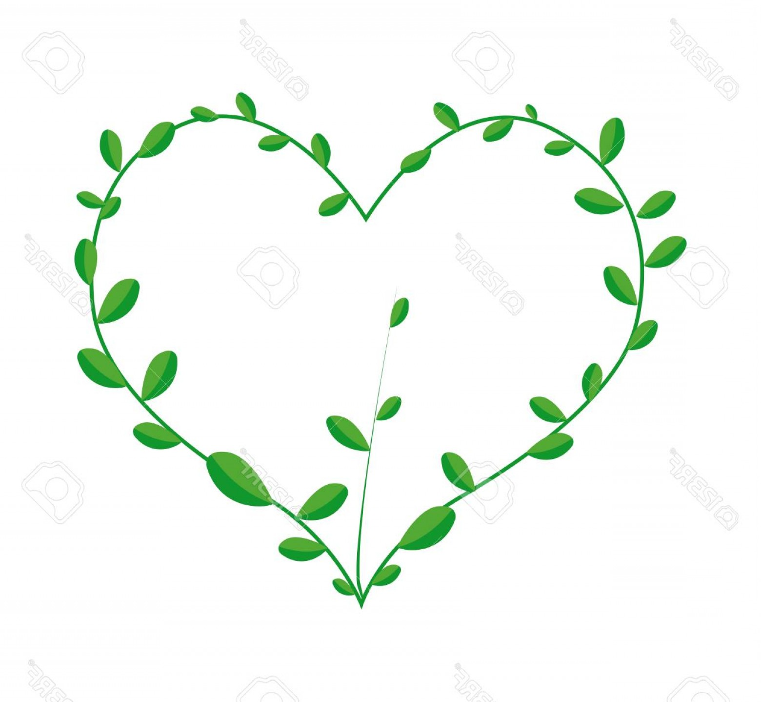 Green Vine Vector: Photostock Vector Love Concept Illustration Of A Heart Shape Frame Made Of Fresh Green Vine Leaves Isolated On A White