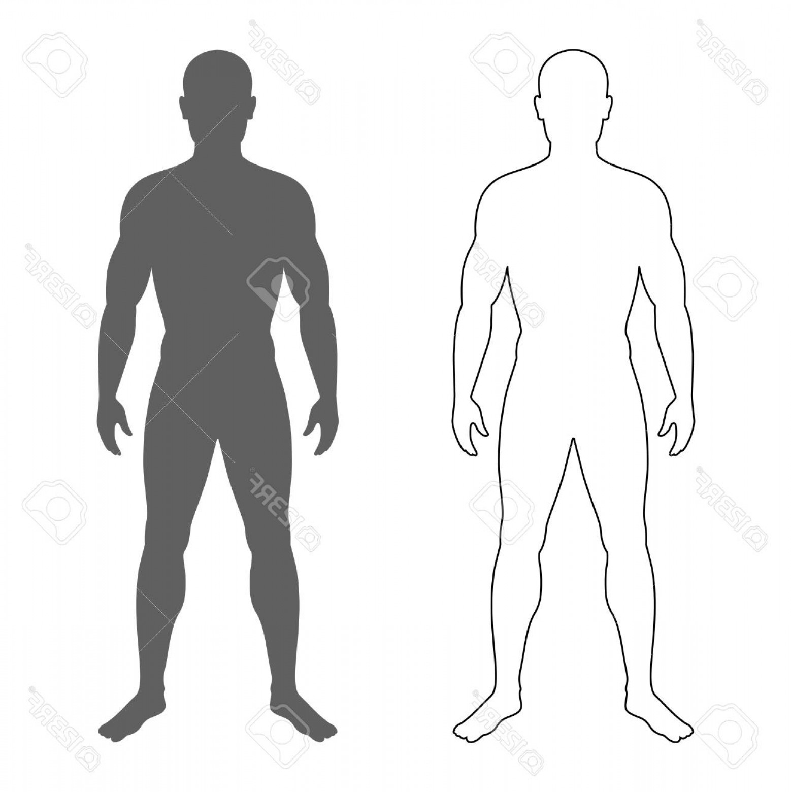Human Body Outline Vector: Photostock Vector Male Human Body Silhouette And Contour Isolated Mens Symbols On White Background Vector Illustration