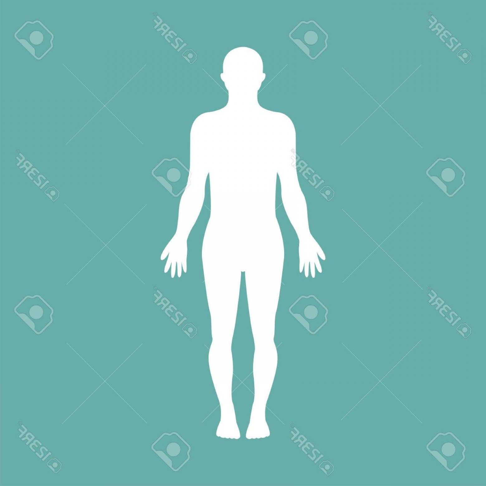 Male Human Vector: Photostock Vector Male Human Body Silhouette With Shadow Vector Illustration