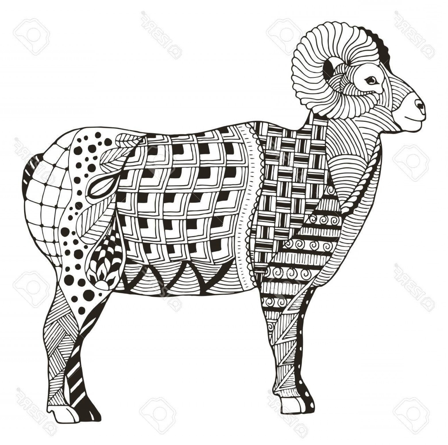 Rocky Mountain Line Art Vector: Photostock Vector Male Rocky Mountain Bighorn Sheep Ram Standing Zentangle Stylized Vector Illustration Freehand Penci