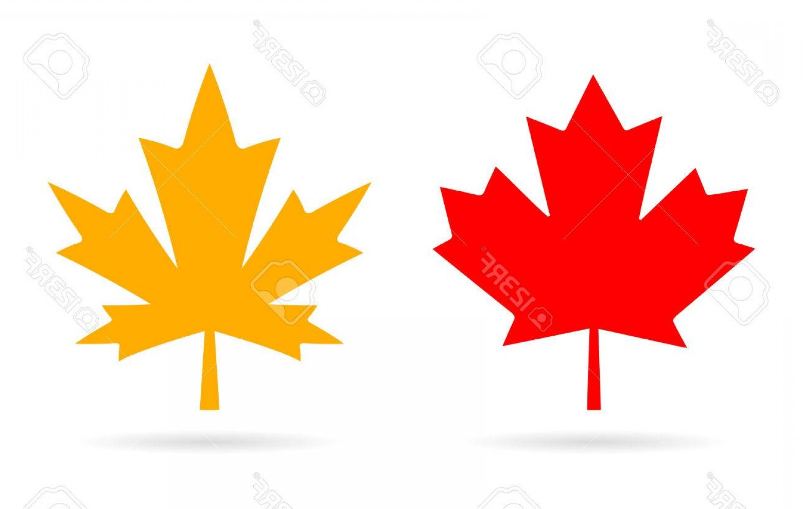 Red Maple Leaf Vector: Photostock Vector Maple Leaf Vector Icon