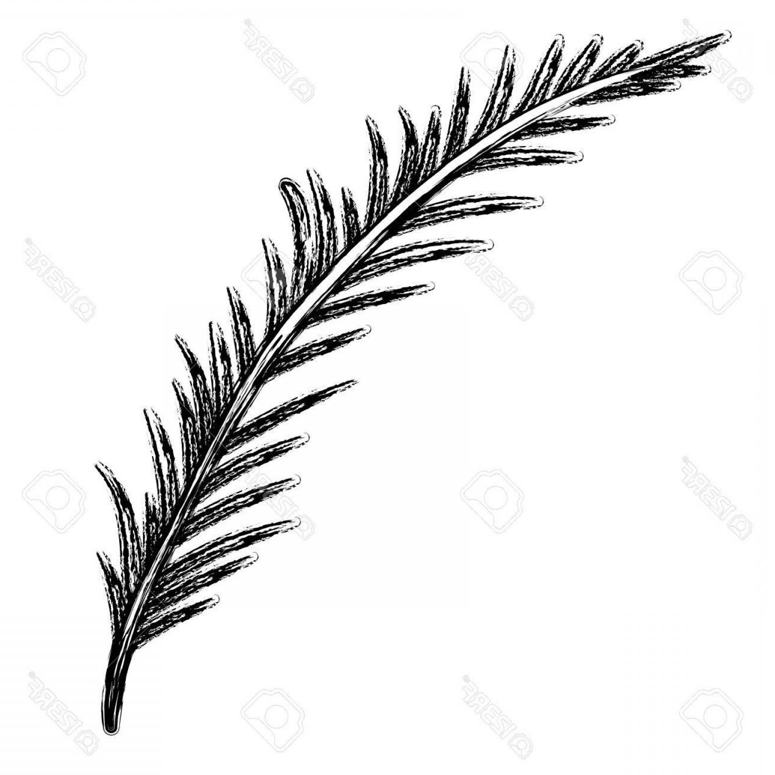 Pine Leaf Vector: Photostock Vector Monochrome Blurred Silhouette Of Branch With Linear Leaves Vector Illustration