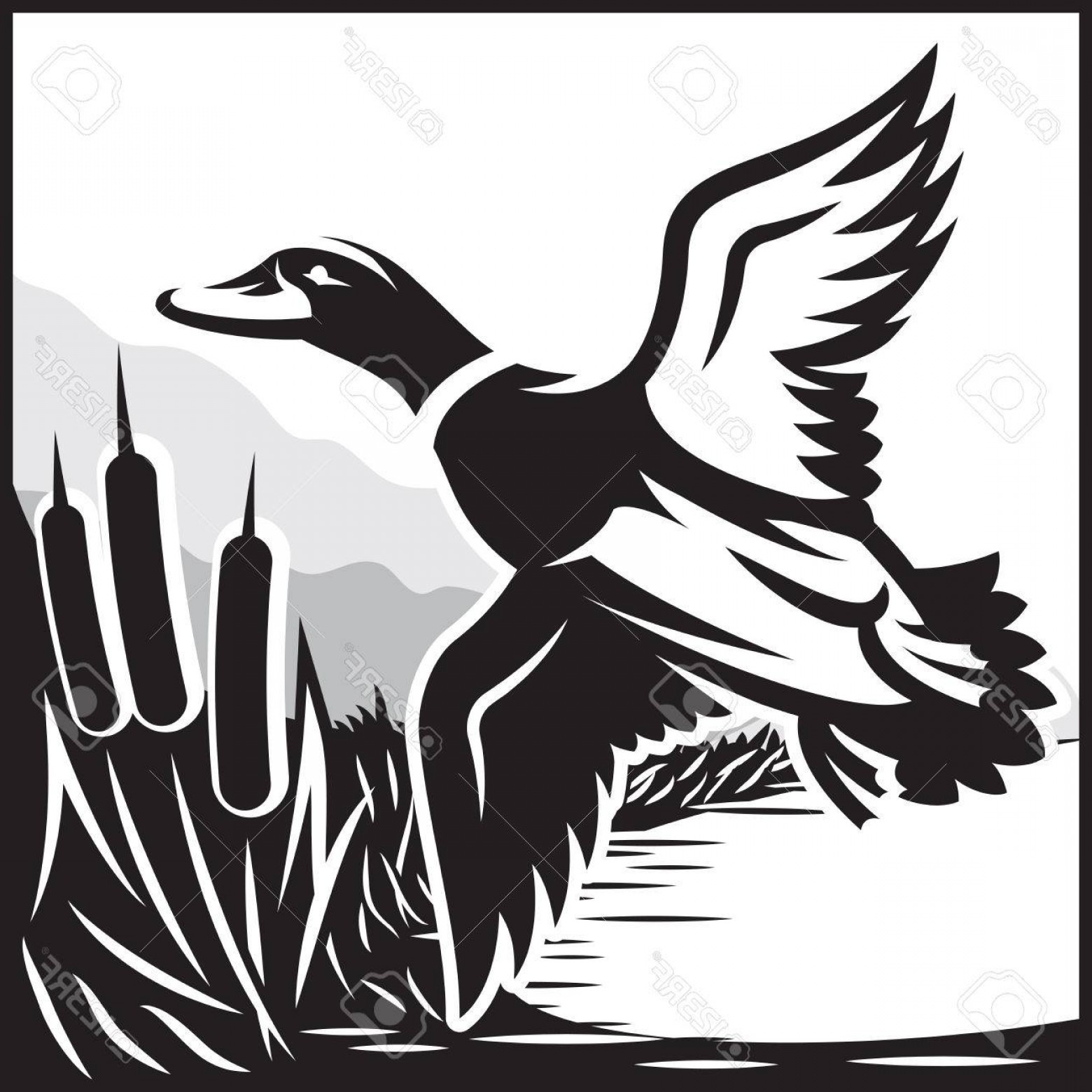 Flying Duck Outline Vector: Photostock Vector Monochrome Vector Illustration With Flying Wild Duck Over The Water