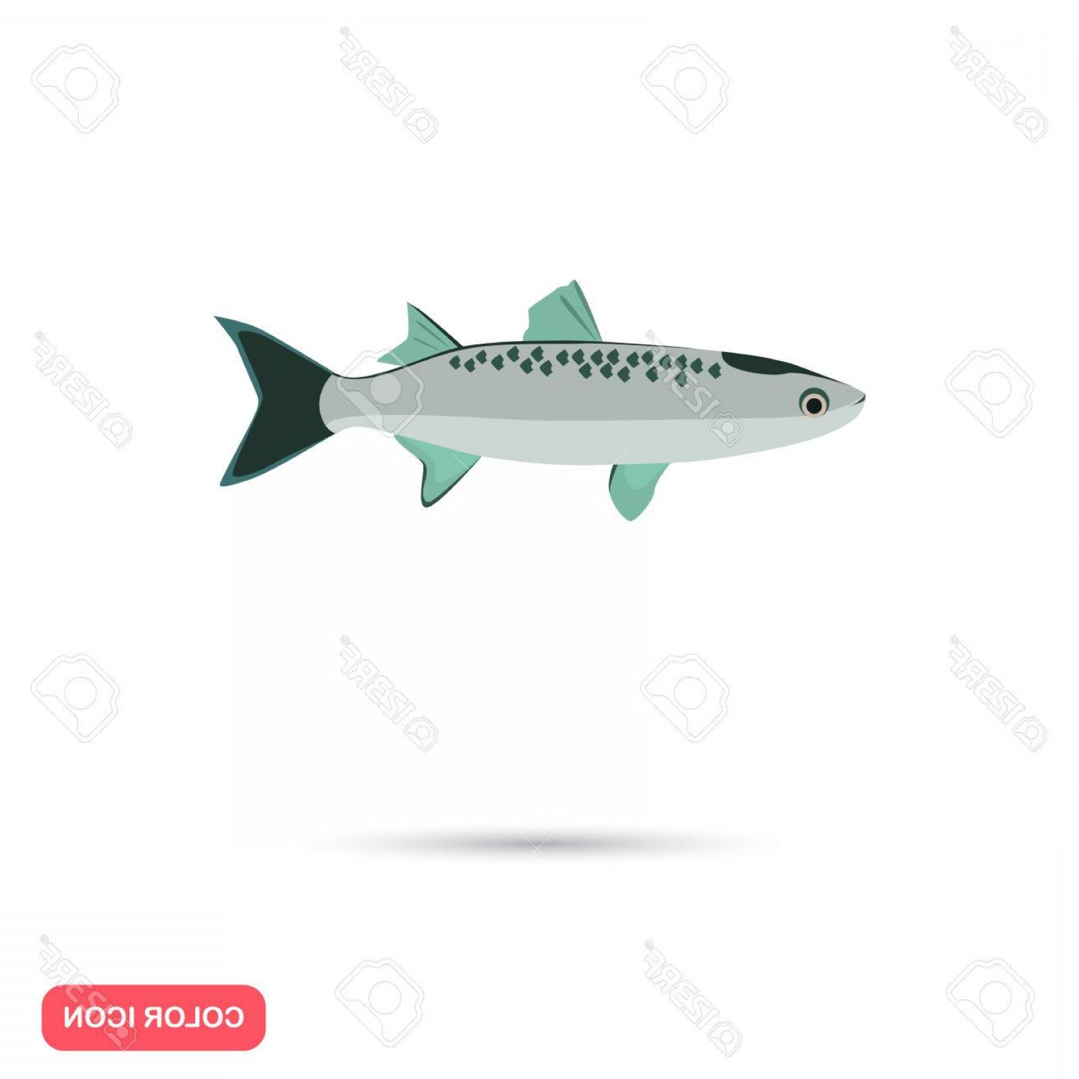 Mullet Vector Logo: Photostock Vector Mullet Fish Color Flat Icon