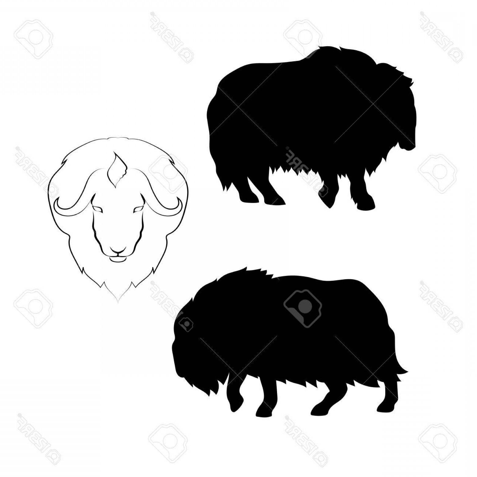 Ox Vector: Photostock Vector Musk Ox Vector Icons And Silhouettes Set Of Illustrations In Different Poses
