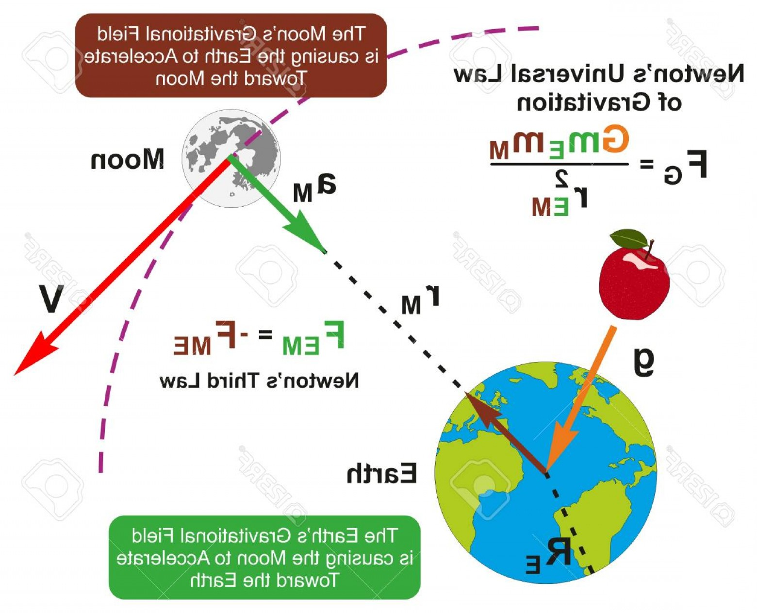 Gravitational Force Vectors: Photostock Vector Newtones Universal Law Of Gravitation Infographic Diagram With Formula And Example Of Earth And Moon
