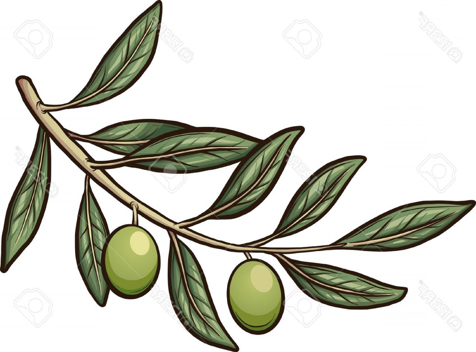 Olive Vector: Photostock Vector Olive Branch With Detachable Olive Vector Clip Art Illustration With Simple Gradients Branch And Oli