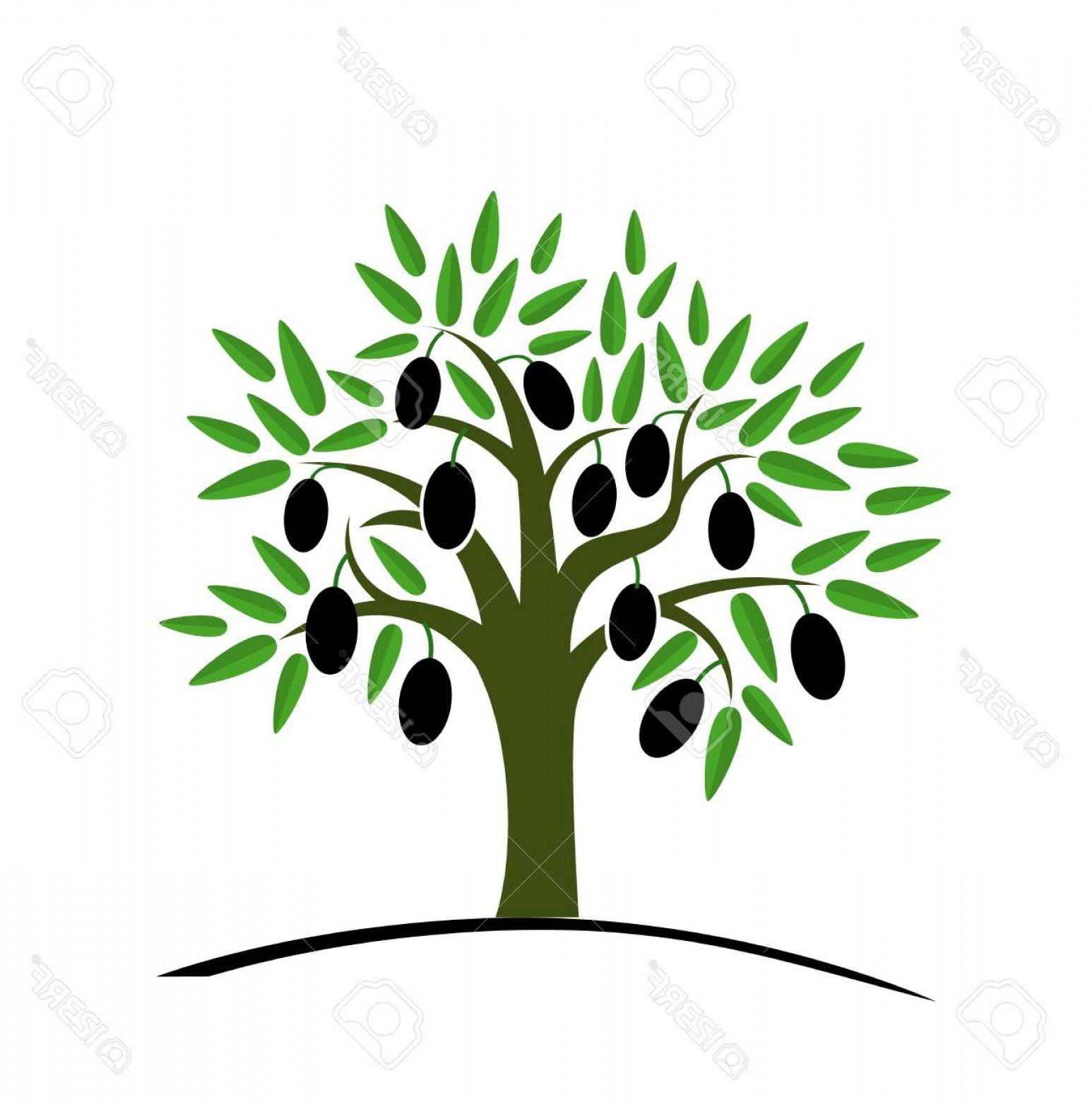 Olive Vector: Photostock Vector Olive Tree With Green Leaves Tree With Black Olives Vector Illustration On A White Background Flat S