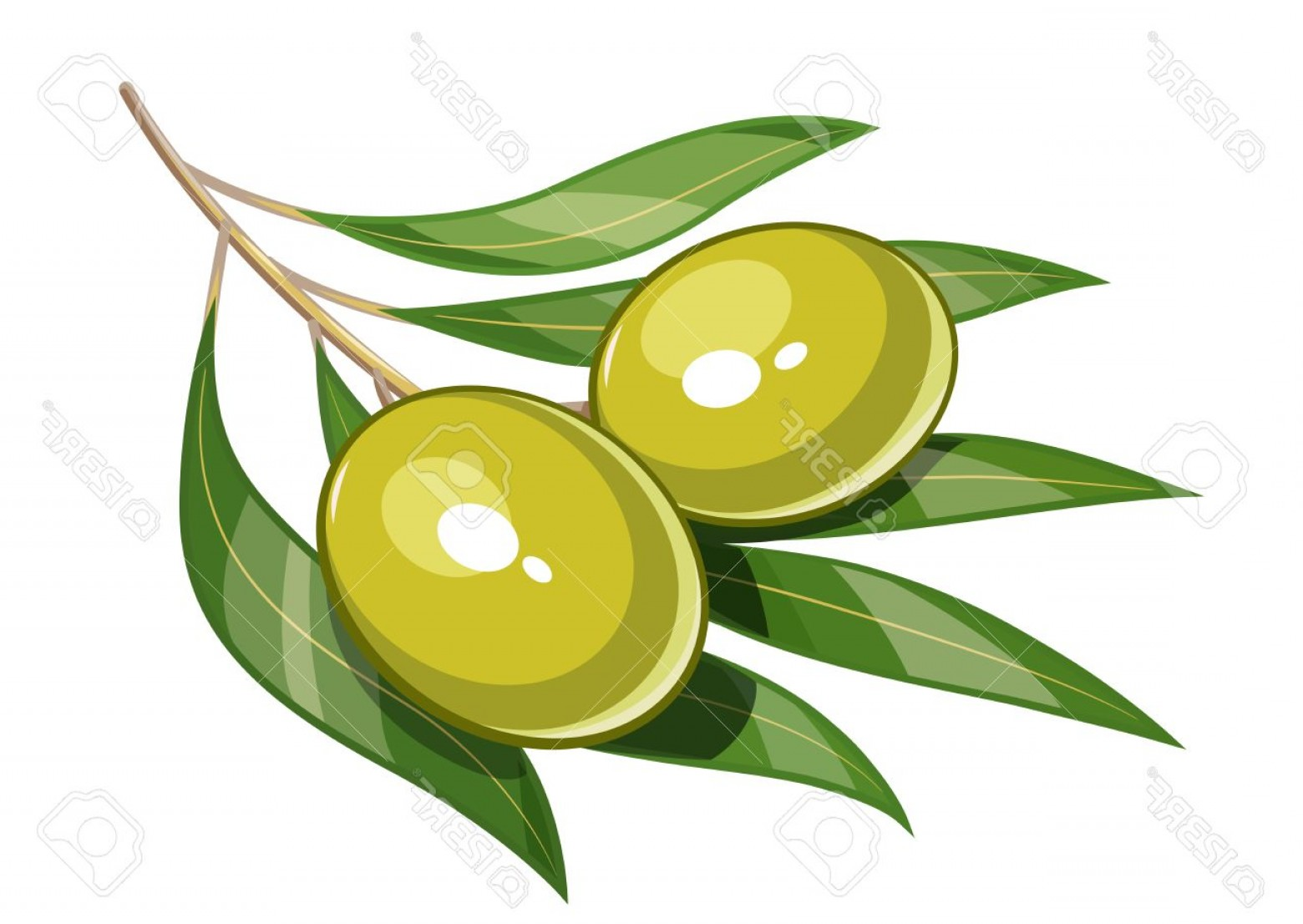 Olive Vector: Photostock Vector Pair Of Green Olive Vector Illustration