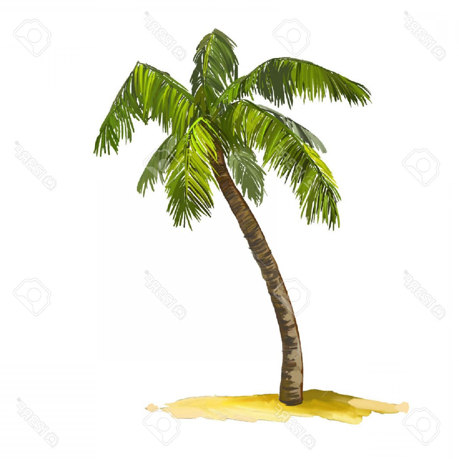 Watercolor Palm Tree Vector: Photostock Vector Palm Tree Vector Illustration Hand Drawn Painted Watercolor