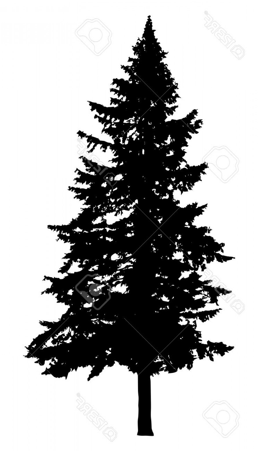 Pine Silhouette Vector: Photostock Vector Pine Tree Silhouette Isolated On White Background