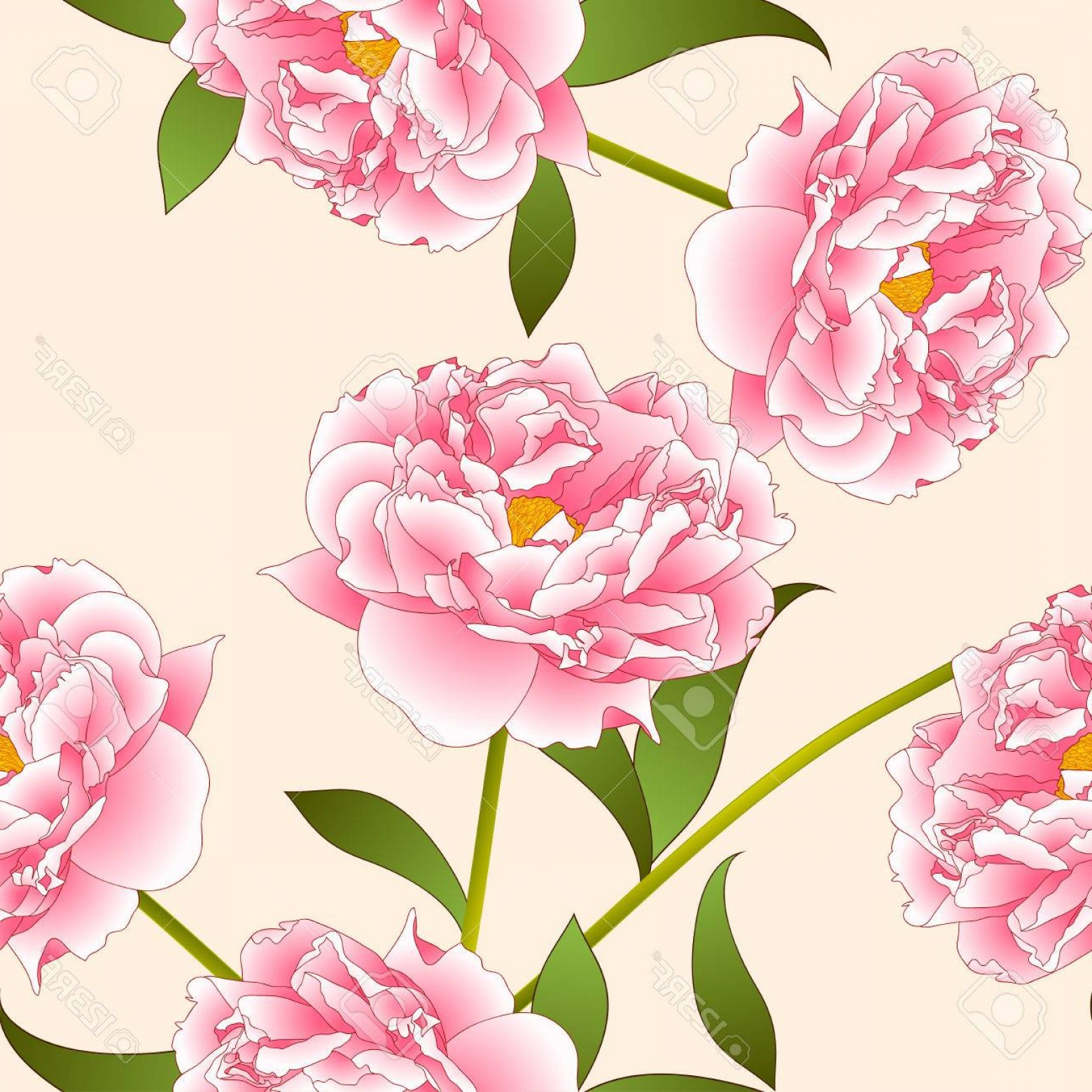 Pink Peony Vector: Photostock Vector Pink Peony Flower On Beige Ivory Background Vector Illustration