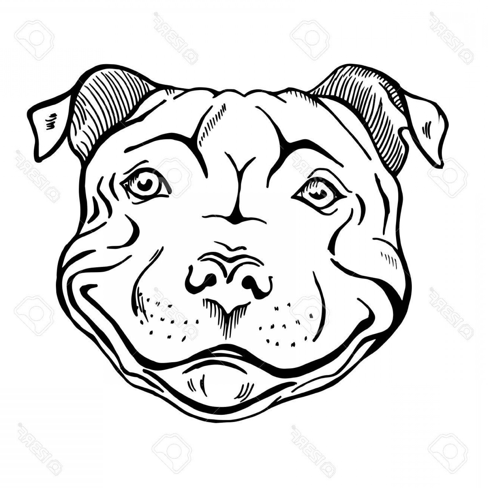 Vector Smiling Bulldog: Photostock Vector Pit Bull Smiling Dog Face Portrait Sketch Black And White Vector Illustration