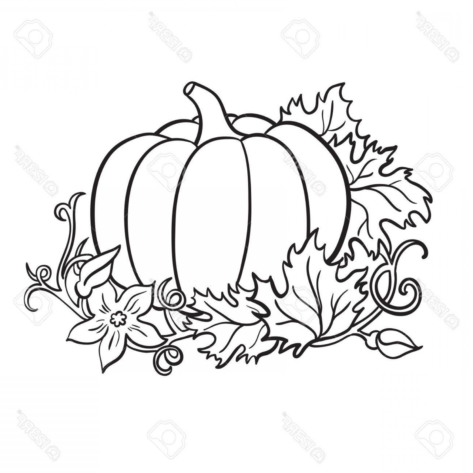 Pumpkin Outline Vector Art: Photostock Vector Pumpkin Vector Drawing Isolated Outline Vegetable With Leaves And Flower On Branch Hand Drawn Harves