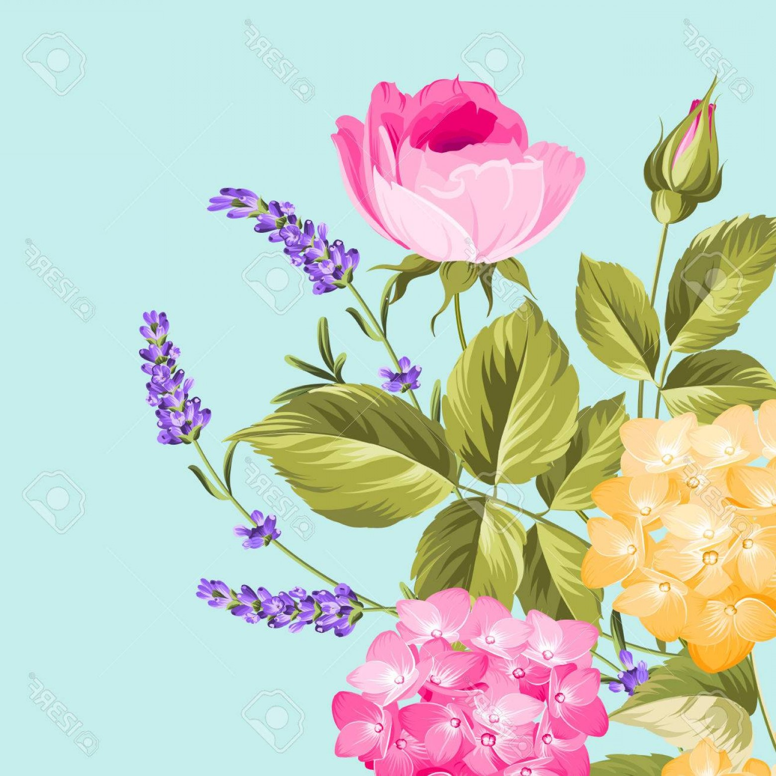 Vector Mop Flower: Photostock Vector Purple Flower Hydrangea On Blue Background Mop Head Hydrangea Flower Isolated Against Blue Lavender