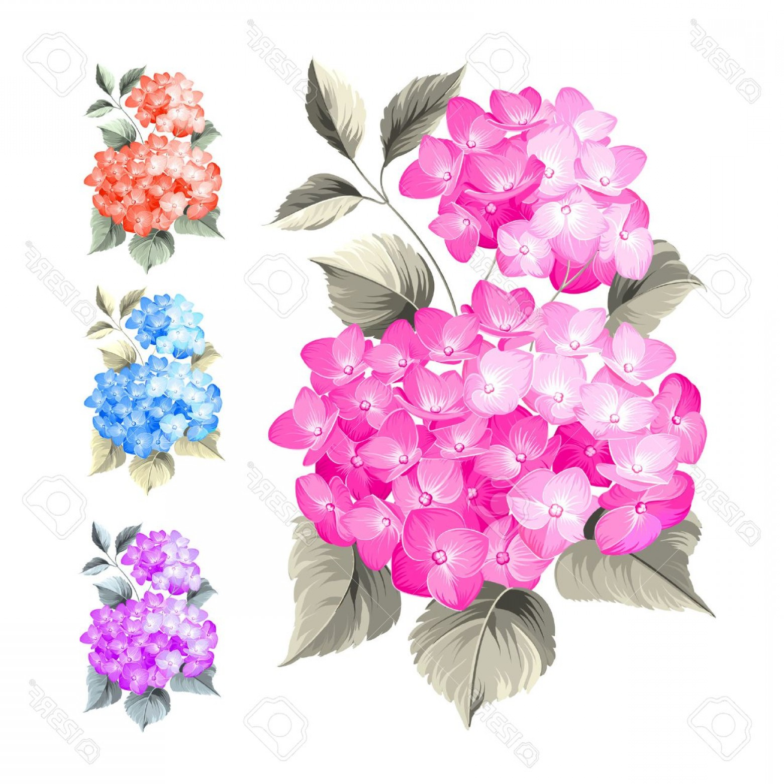 Vector Mop Flower: Photostock Vector Purple Flower Hydrangea On White Background Mop Head Hydrangea Flower Isolated Against White Beautif