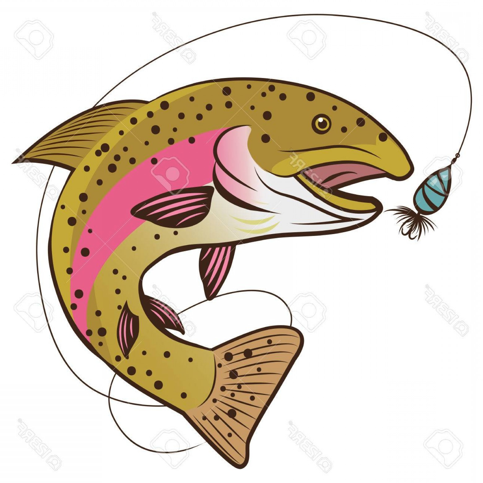 Speckled Trout Vector: Photostock Vector Rainbow Trout Vector Isolated On A White Background Fish Mascot Vector Illustration The Real Fishing