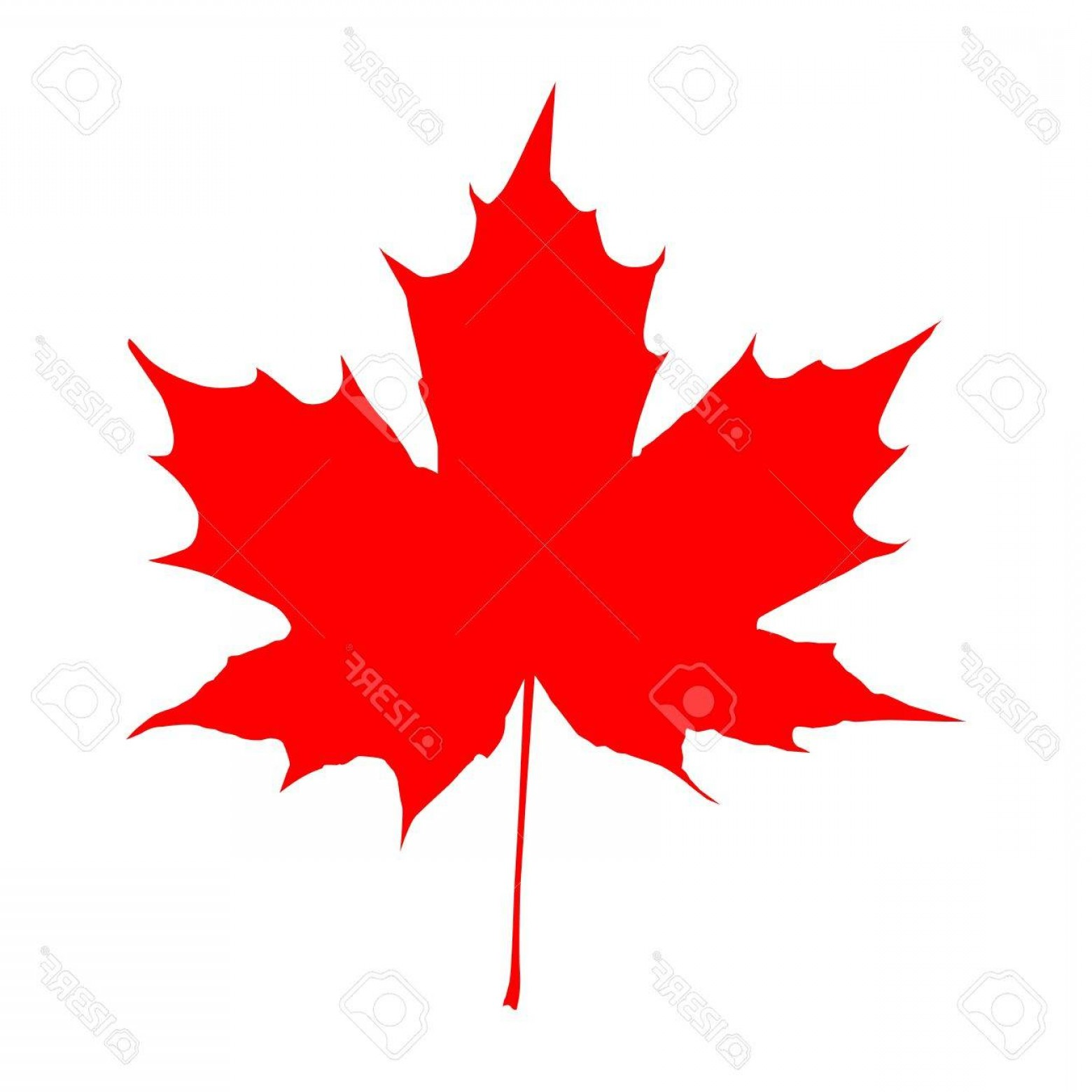 Red Maple Leaf Vector: Photostock Vector Realistic Red Maple Leaf Isolated On White Background Vector Eps Illustration
