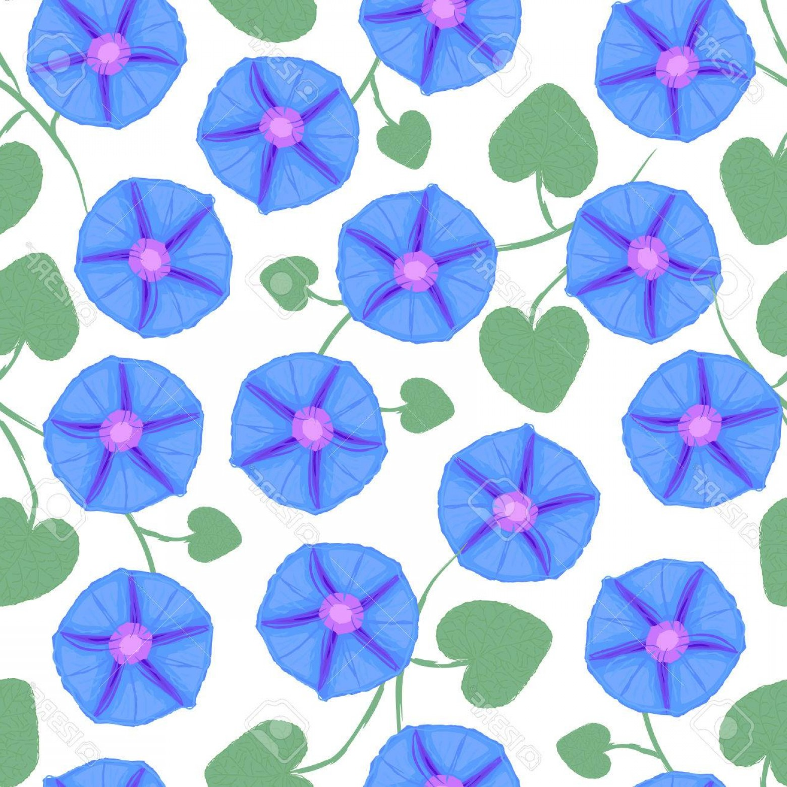 Morning Glory Transparent Vector: Photostock Vector Seamless With Flower Ipomoea Morning Glory Vector Illustration Without Transparency