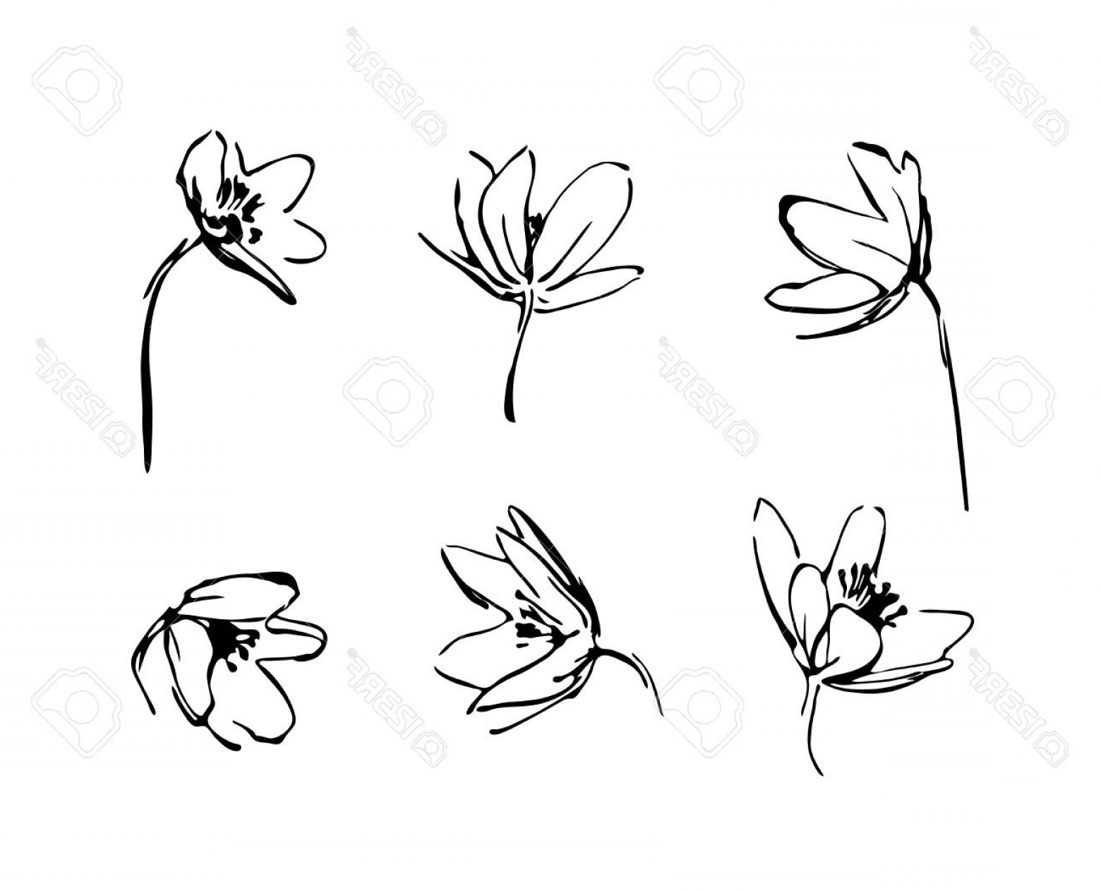Wildflowers Outline Vector: Photostock Vector Set Of Hand Drawn Wildflowers Outline Flower Plant Silhouette Brush Ink Painting Black Isolated Vect