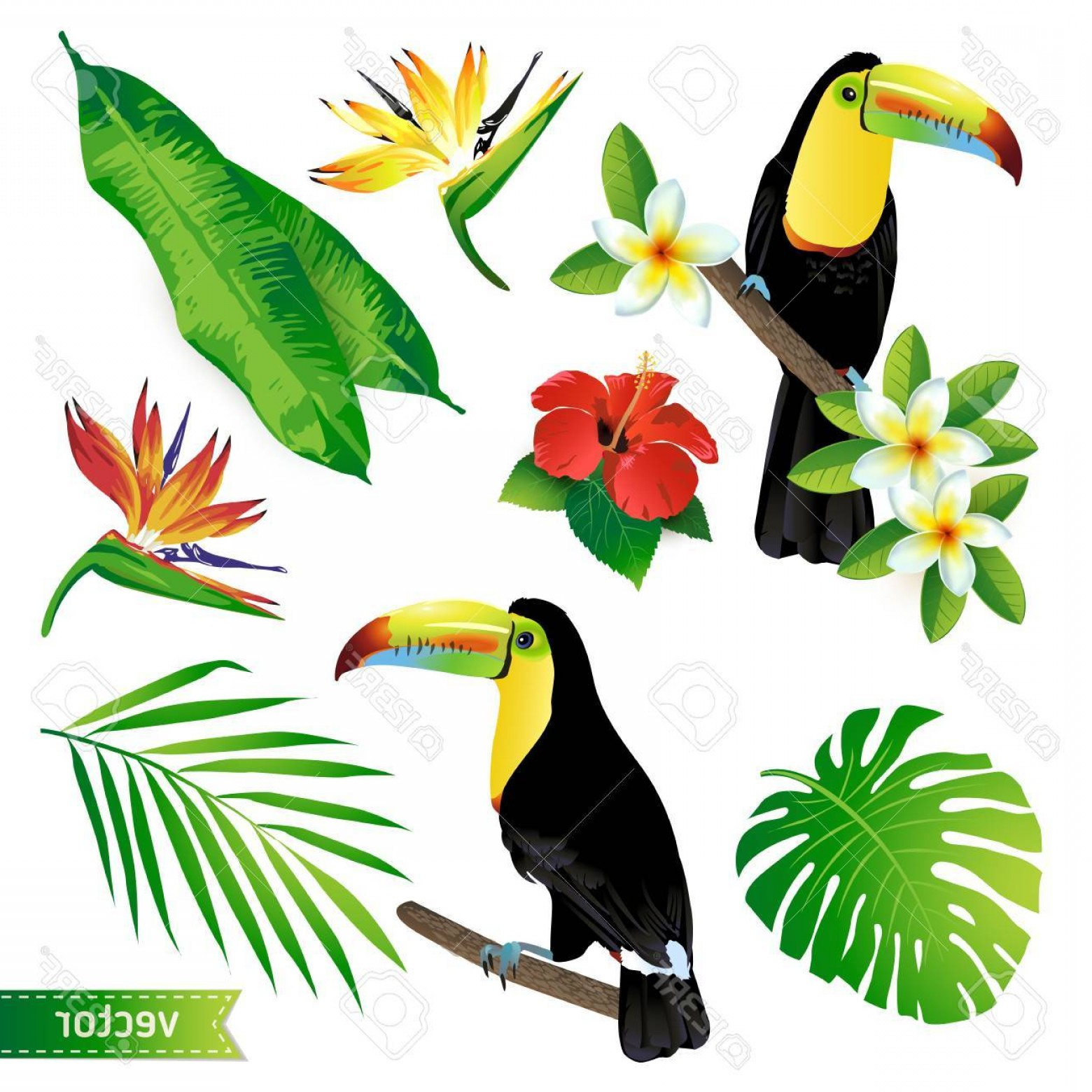 Toucan Vector: Photostock Vector Set Of Tropical Flowers Leaves And Birds Toucan Vector
