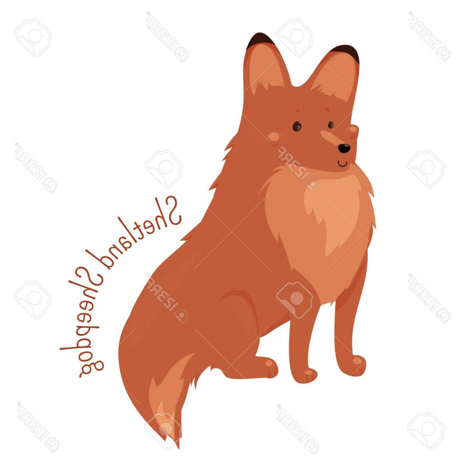 Double Boxer Dog Vector: Photostock Vector Shetland Sheepdog Isolated Sheltie Rough Collie Breed Of Herding Dog Small Double Coated Working Dog