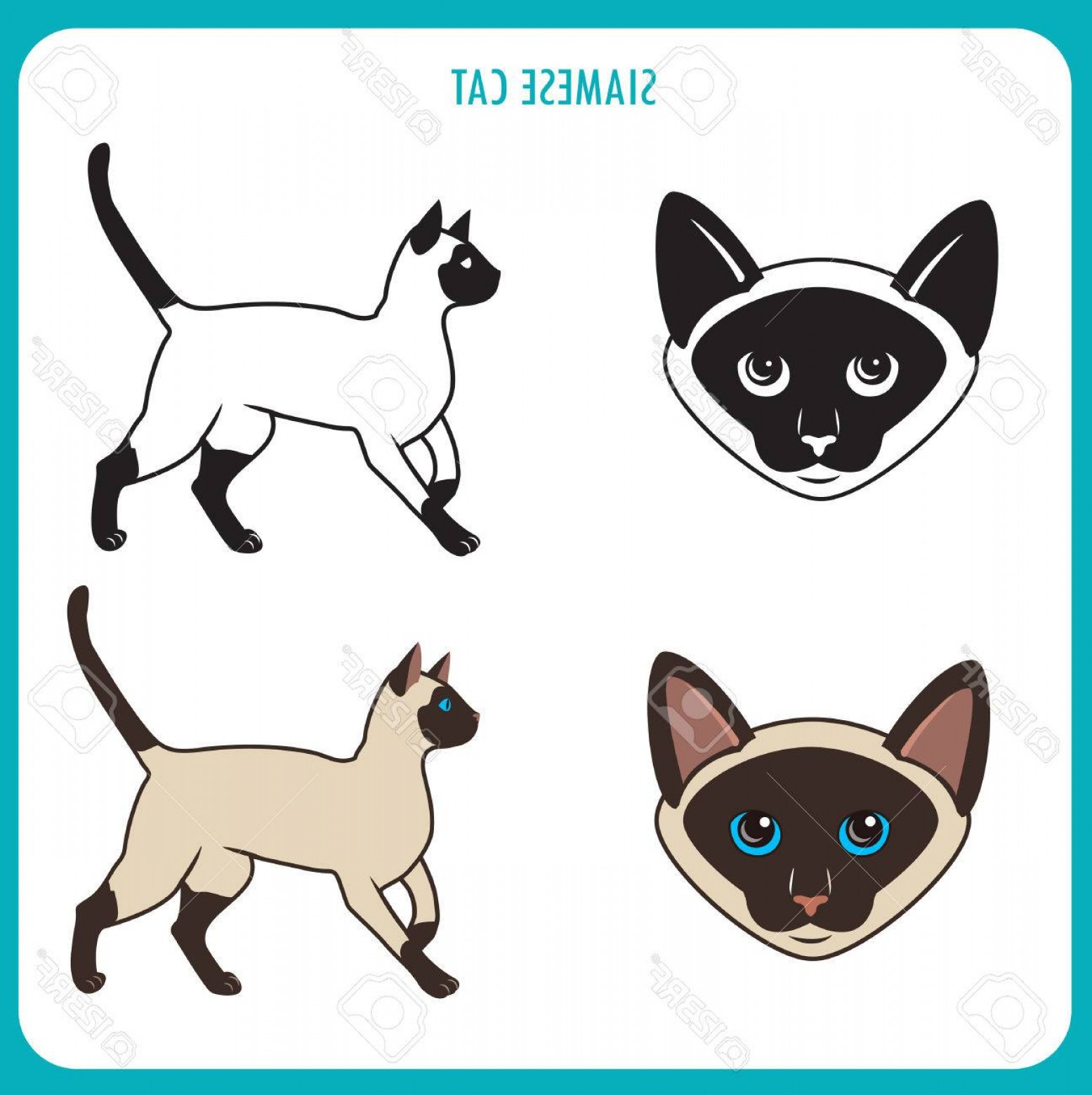 Siamese Cat Vector Transparent Background: Photostock Vector Siamese Cat Set Face And Body Vector On A White Background Siamese Cat Vector Illustration Siamese C
