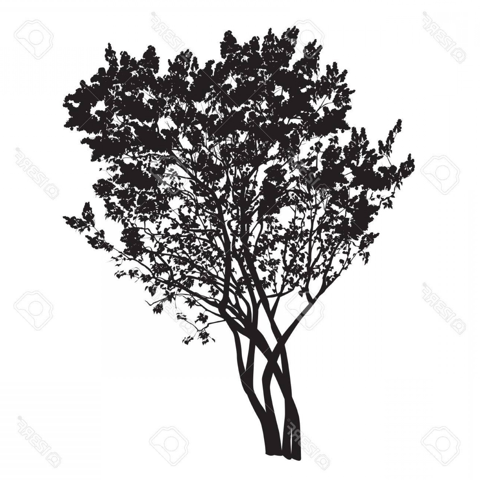 Spring Vector Silhouette: Photostock Vector Silhouette Of A Bush Of The Blossoming Lilac In The Spring In The Vector Image On A White Background