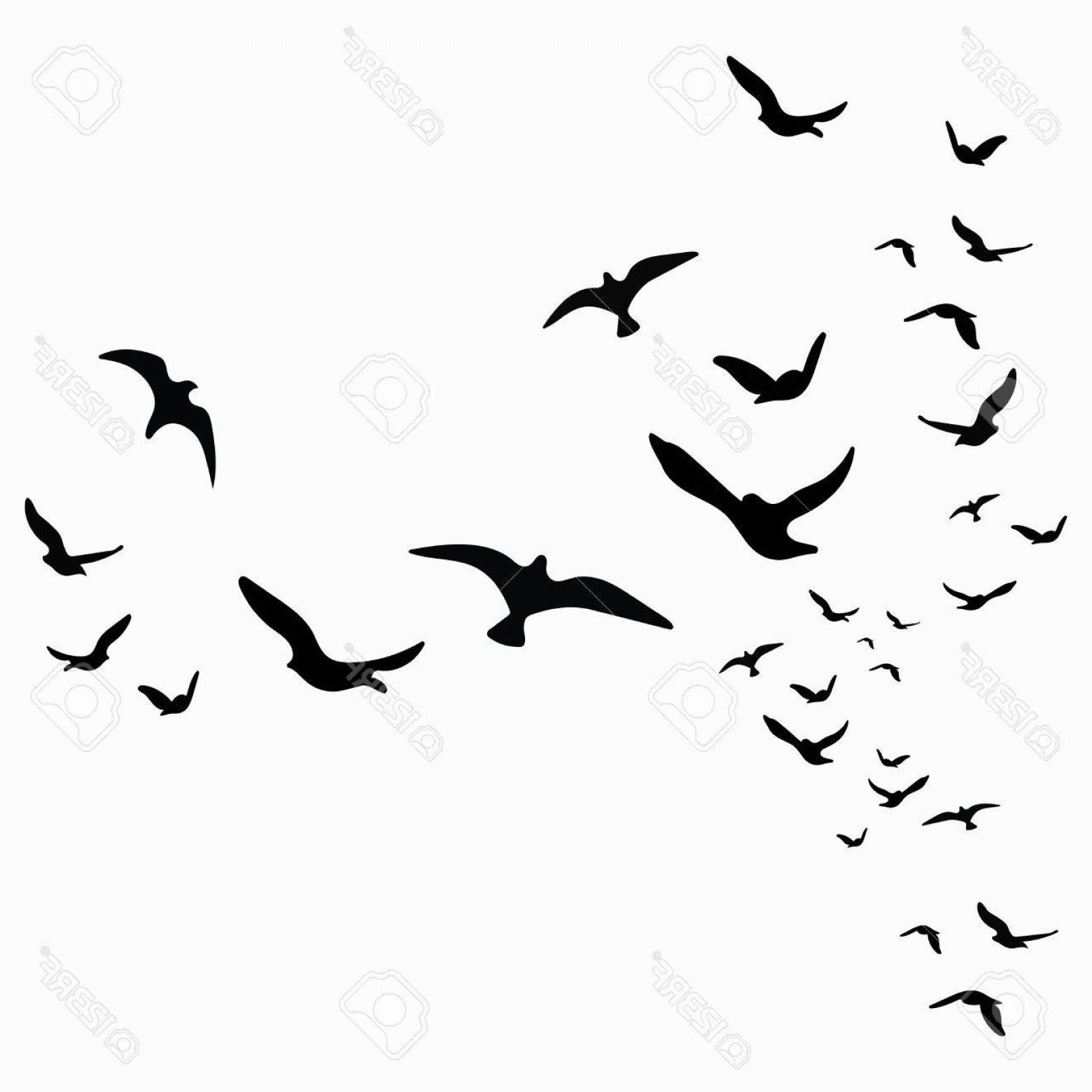 Bird Flying Vector Art: Photostock Vector Silhouette Of A Flock Of Birds Black Contours Of Flying Birds Flying Pigeons Tattoo Isolated Objects