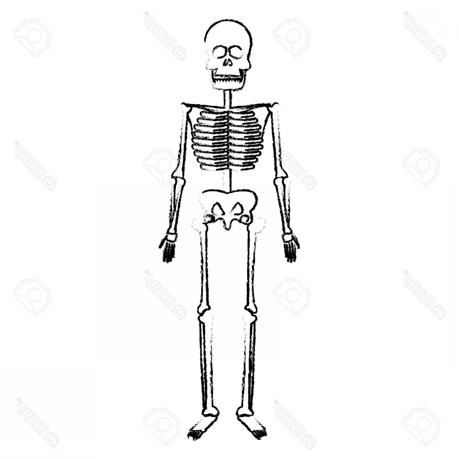 Line Art Human Body Skeleton Labeled Bones Of The Vector: Photostock Vector Skeleton Human Body Bones Medical Vector Illustration