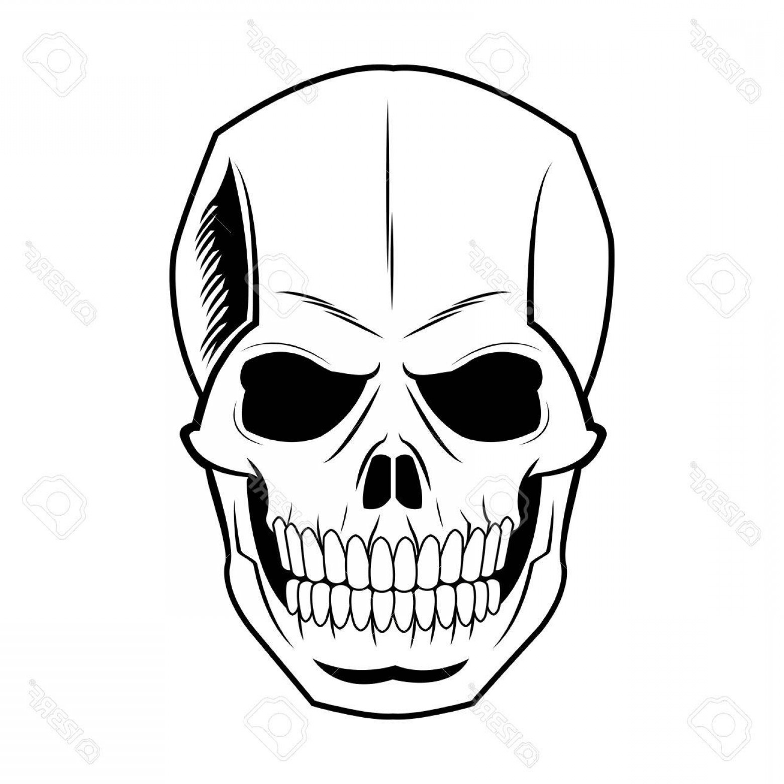 Line Art Human Body Skeleton Labeled Bones Of The Vector: Photostock Vector Skeleton Of The Human Head Vintage Bone Vector Illustration
