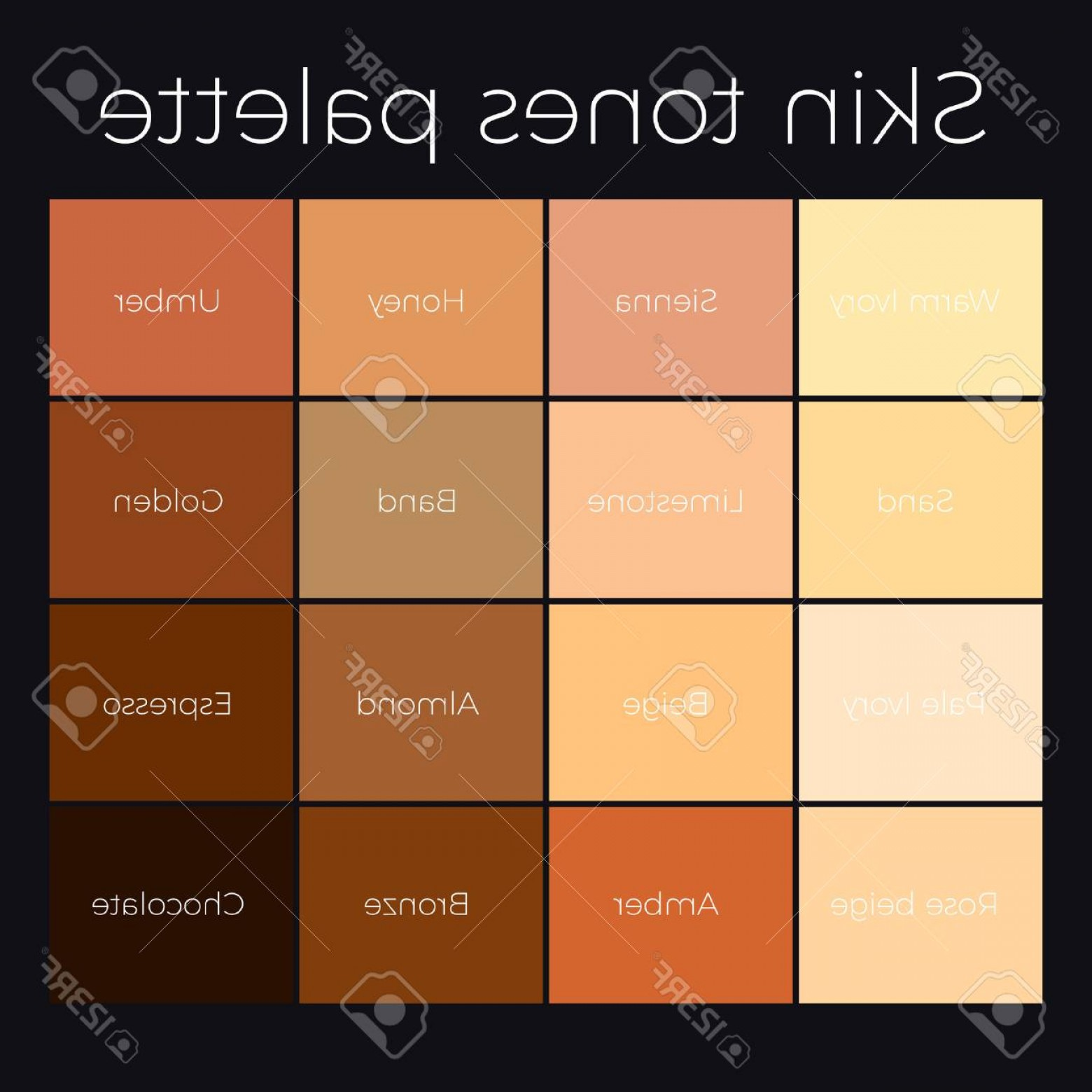 Pallet Vector Graphic: Photostock Vector Skin Tones Palette Vector Skin Color Chart