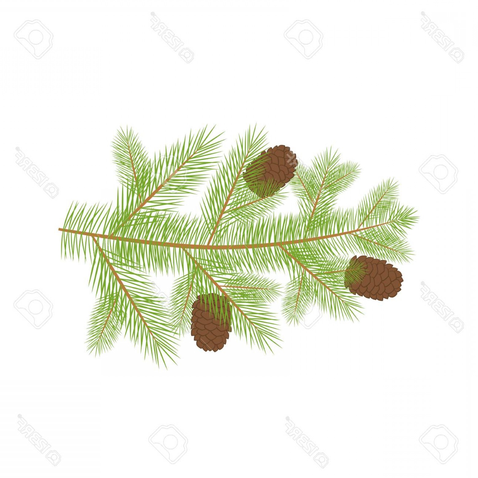 Pine Tree Vector Format: Photostock Vector Small Christmas Fur Tree Branch With Natural Pine Cones In Vector Format